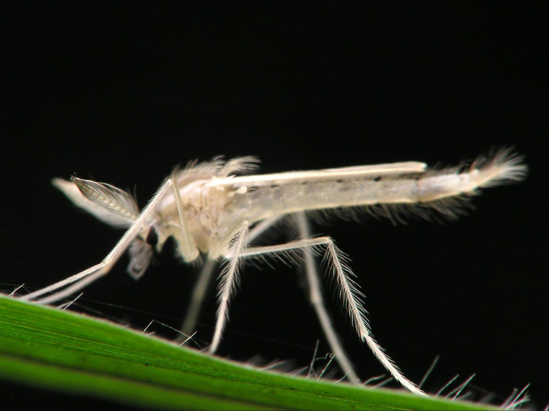 Mosquitoes test positive for West Nile virus in Fox River Grove