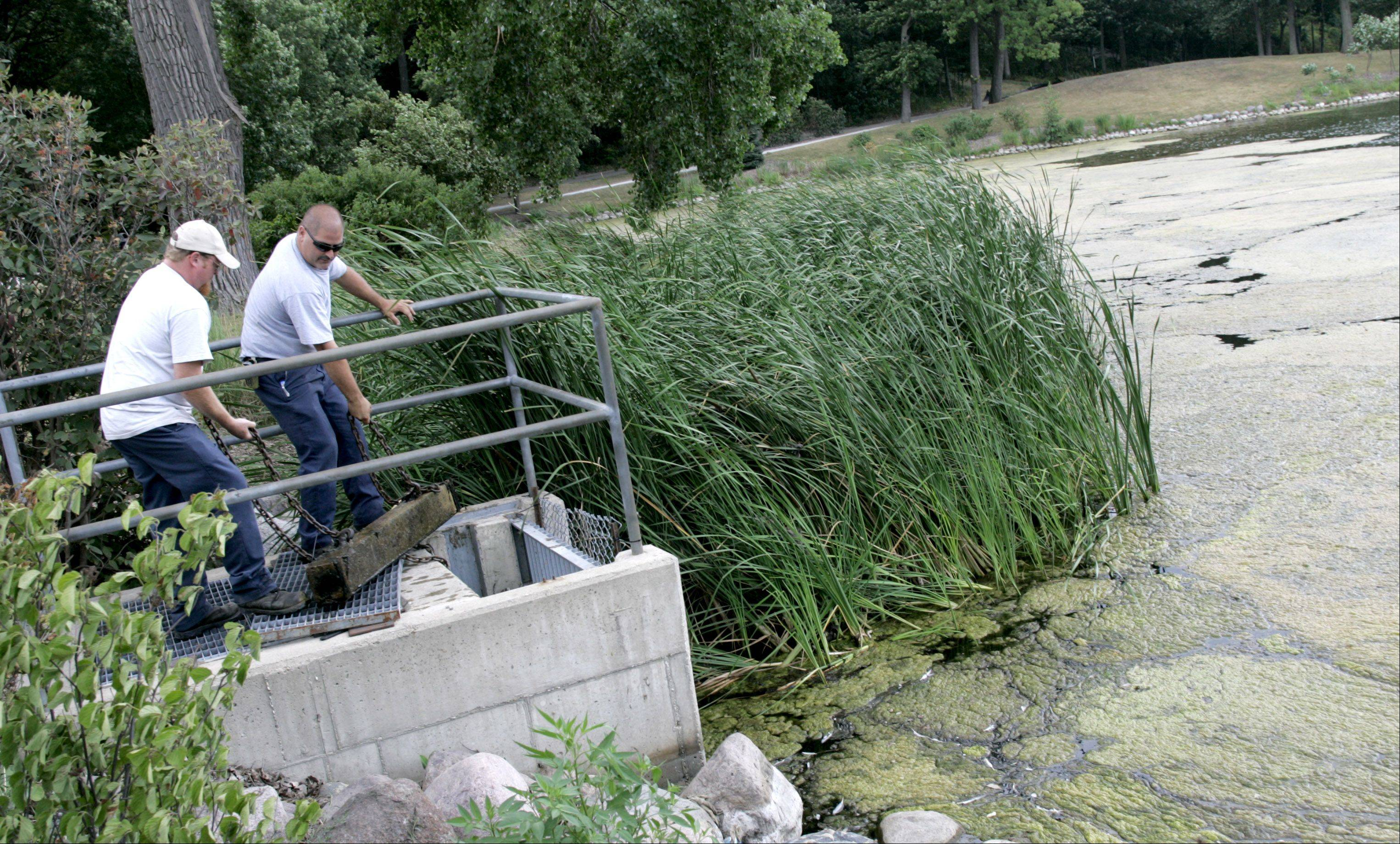 Lake Ellyn in Glen Ellyn, seen here in a Daily Herald file photo, has been experiencing increased algae growth and more noticeable fish kills lately because of the recent heat wave and droughtlike conditions.