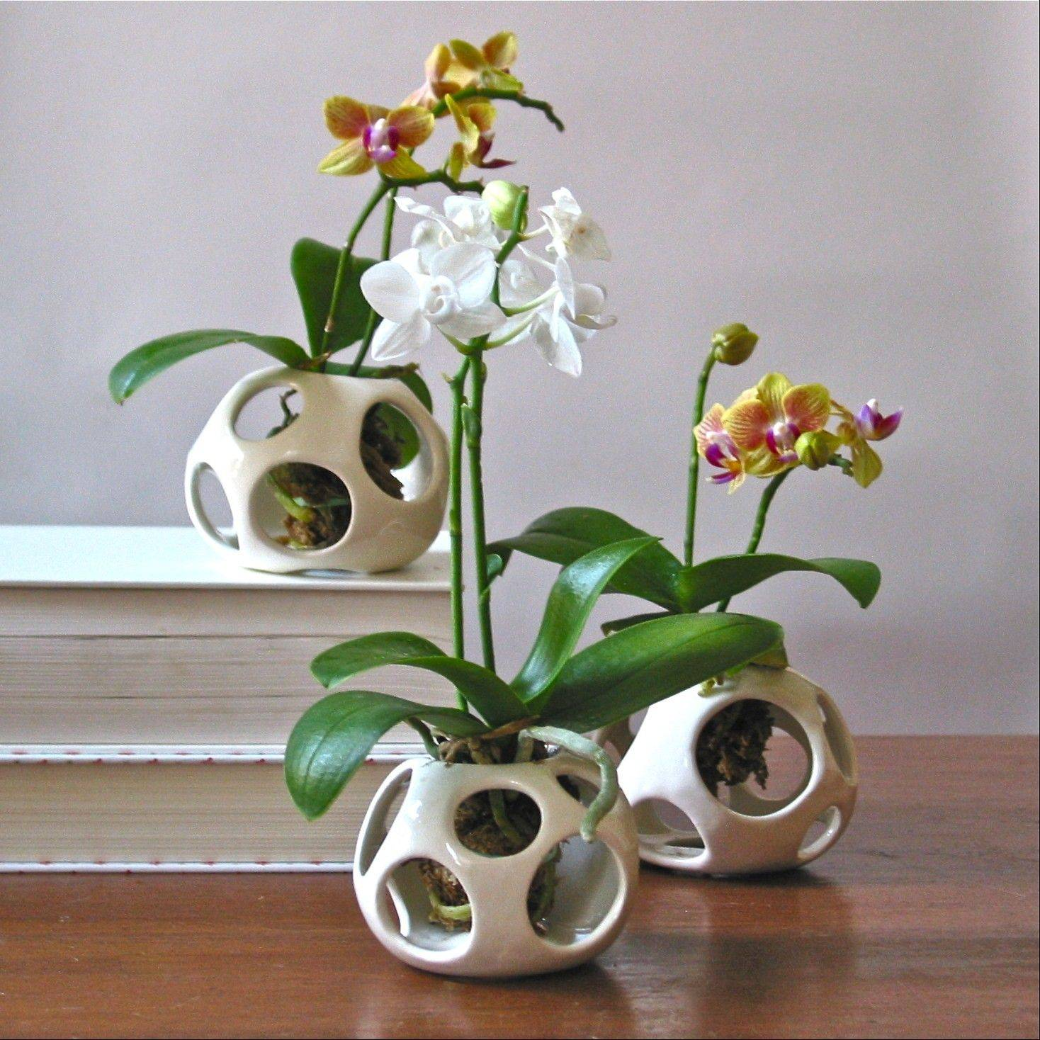 In this undated image released by air pod plant holders, New York-based ceramic artist Nicholas Newcombís earthenware air pod holders showcase miniature orchids in New York.