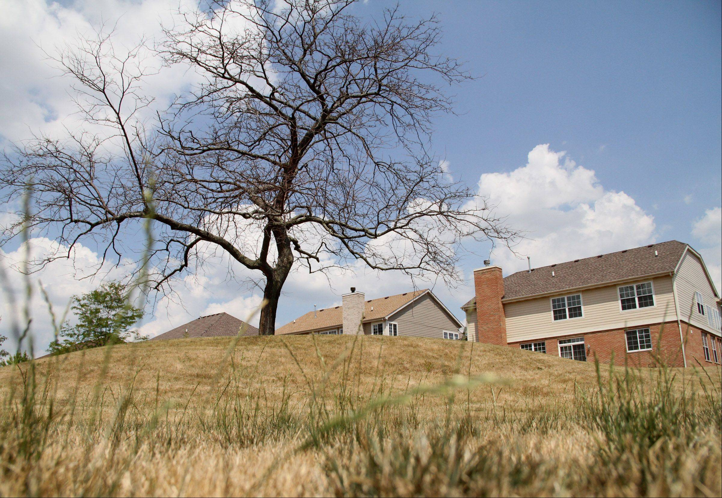 Dry grass and a dead tree are signs of the drought conditions near Horizon Park in Wheeling.