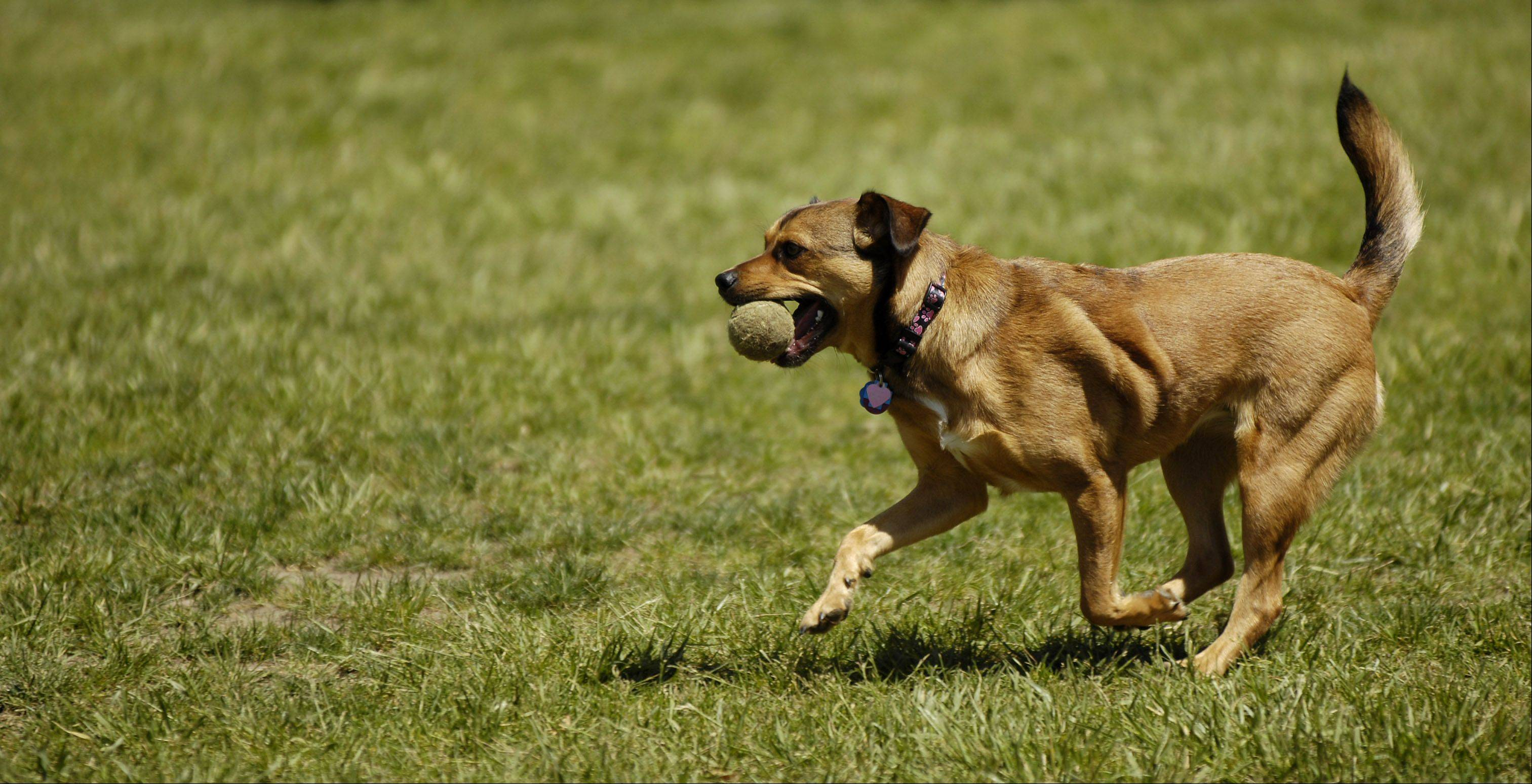 Hoffman Estates dog park nearing completion