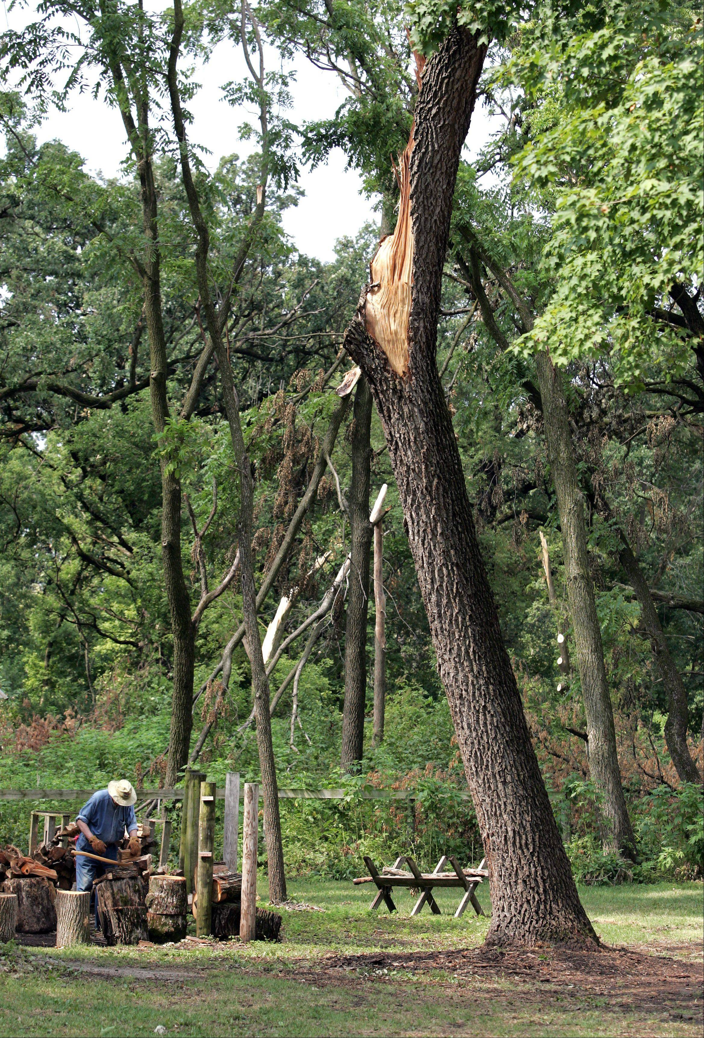 Several trees were knocked down or severely damaged at Kline Creek Farm near West Chicago during the July 1 storm. Volunteers helped with the recovery at the 1890s living-history site, and now officials hope they will collectively donate more than $4,100 to help repair the farm's signature windmill.