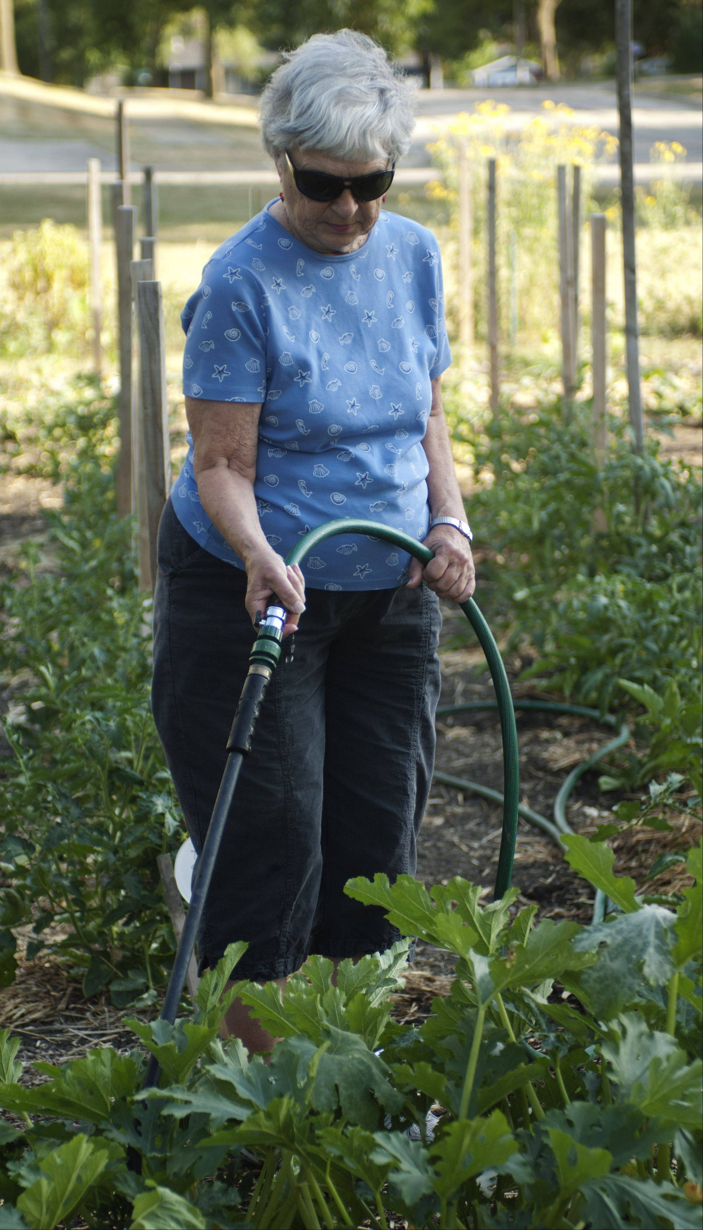 Marian Colliander waters plants at the Schaumburg Garden Club's Giving Garden, a 5,000-square-foot garden dedicated to growing produce for the Schaumburg Township food pantry.