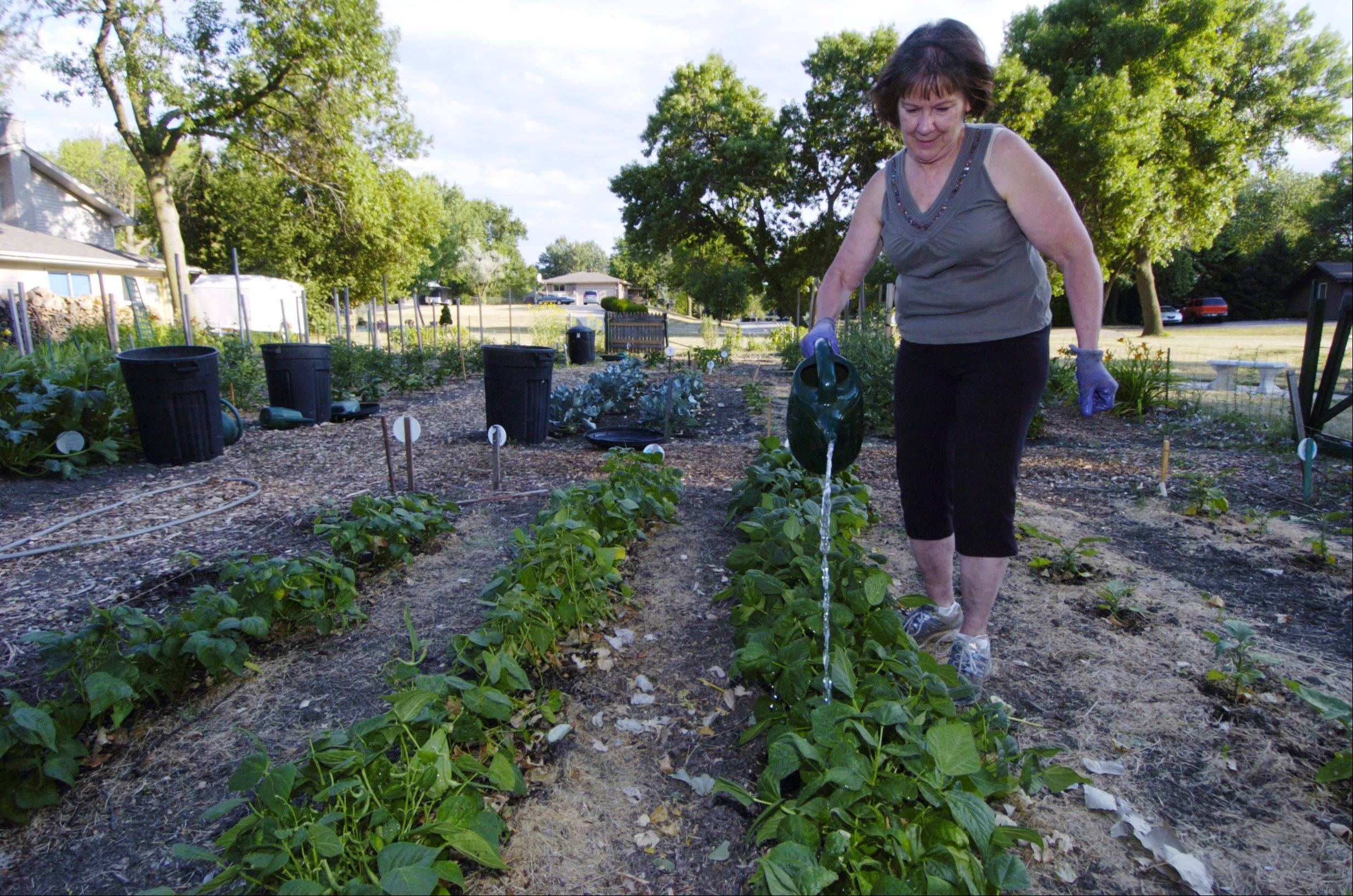 Jan Doud, president of the the Schaumburg Garden Club, waters vegetables as members work at their garden.