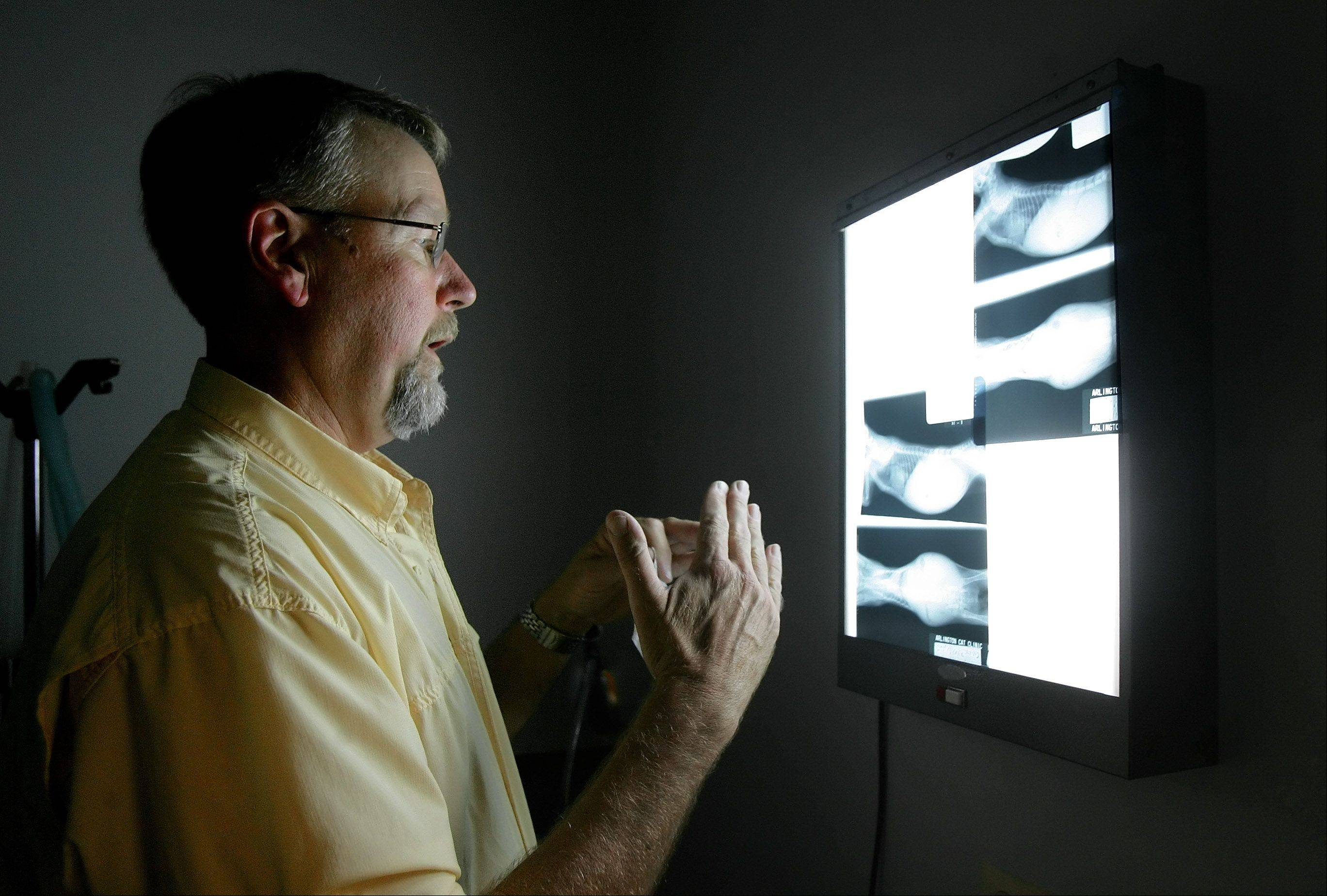 Veterinarian Dr. Bob Esbensen stops to look at an X-ray of a kitten at the Arlington Cat Clinic.