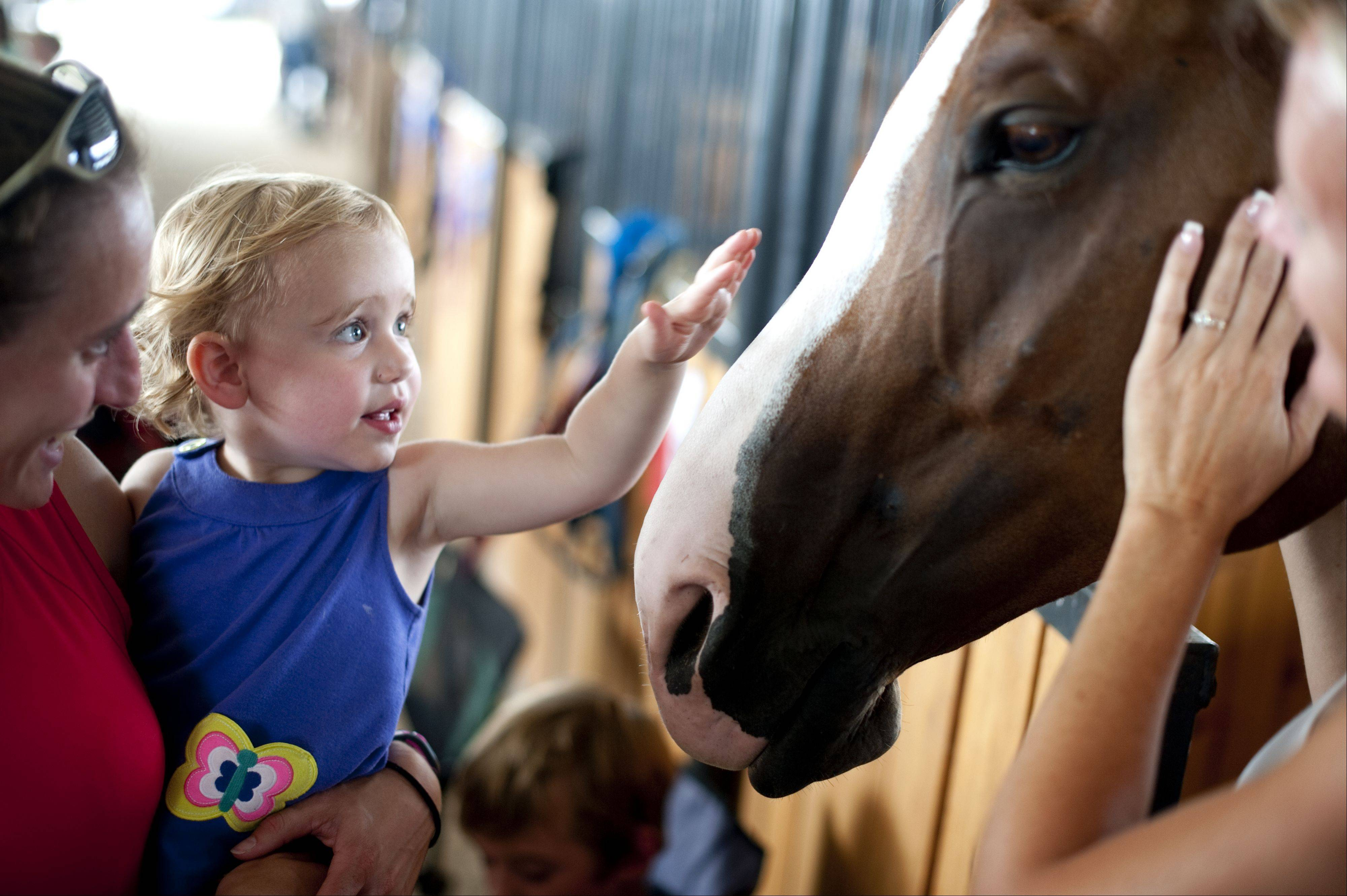 Scout Bernard, 2, of Chicago visits the horse stables at the Kane County Fair in St. Charles Saturday. Children had the opportunity to pet a variety of farm animals including horses, cows and pigs under the watch of the animals' owners.