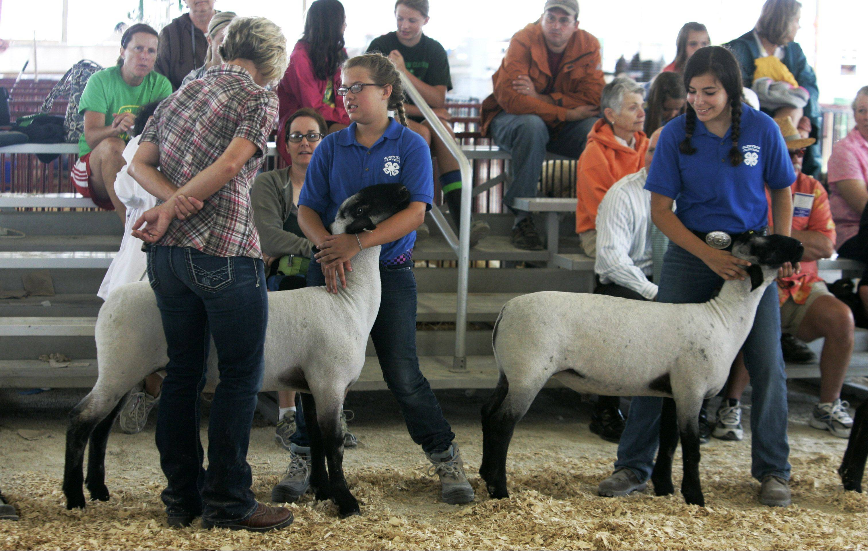 Judge Christine Spilde looks over the animals at last year's Lake County Fair in Grayslake.