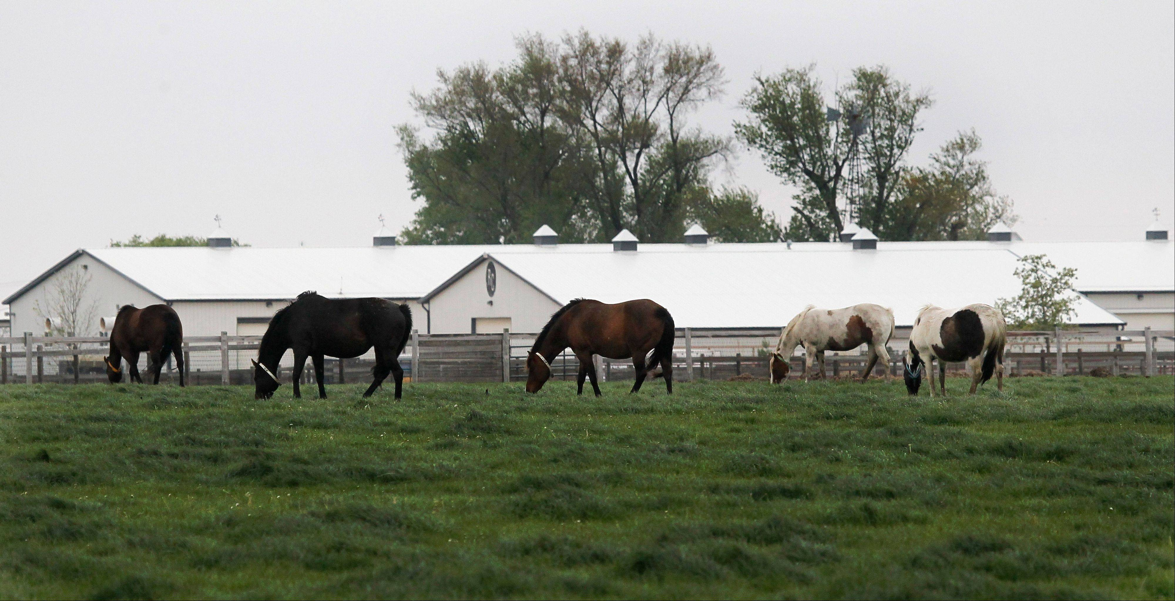 Horses graze at the ranch owned by Rita Crundwell outside of Dixon on April 20. Crundwell has pleaded not guilty to charges alleging she stole more than $53 million from the small northern Illinois city to pay for a lavish lifestyle and create a horse-breeding operation.