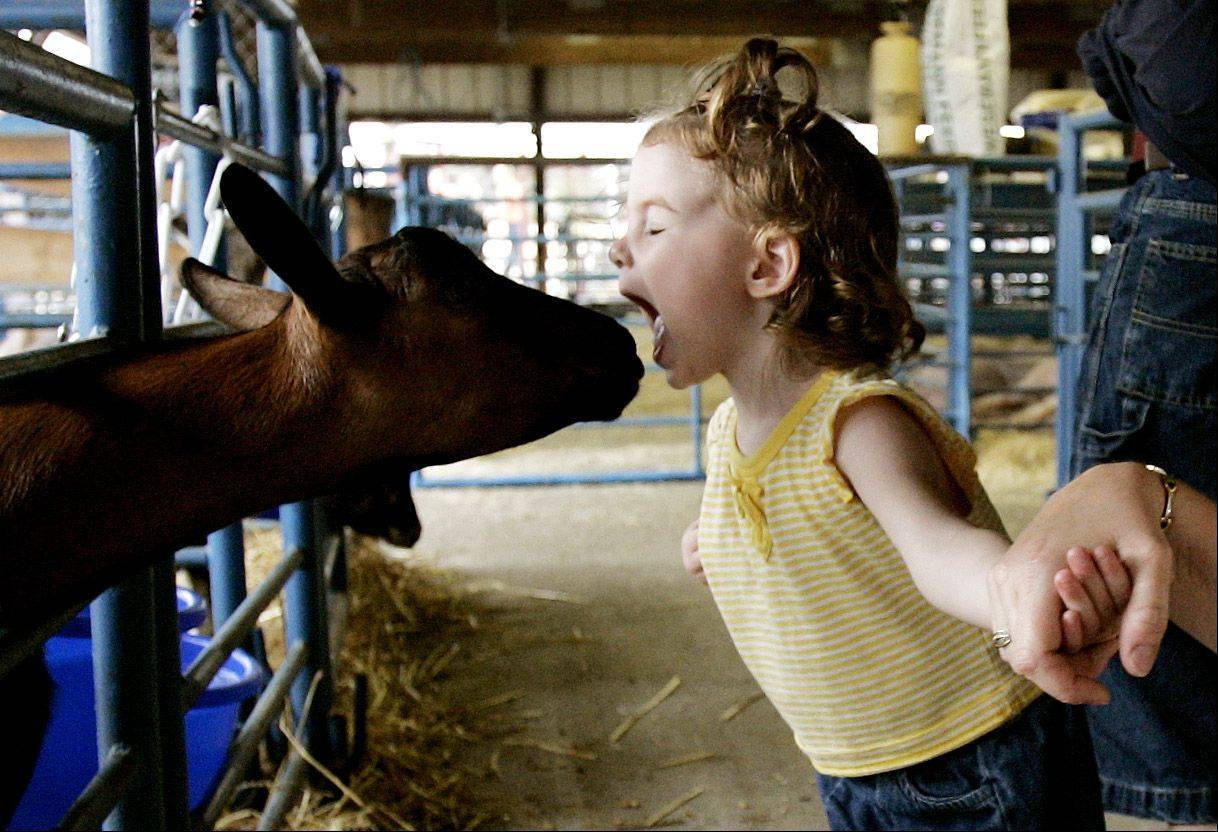 2004: Makenzie Mann of Aurora was just 20 months old when she came face-to-face with a goat on opening day of the fair's 50th anniversary year.