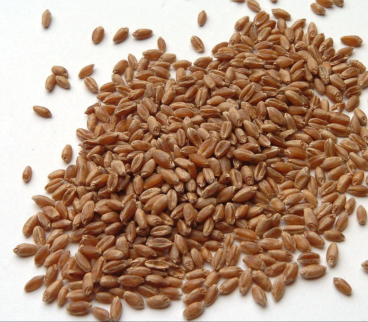 Bob Chwedyk/bchwedyk@dailyherald.com Wheat Berries
