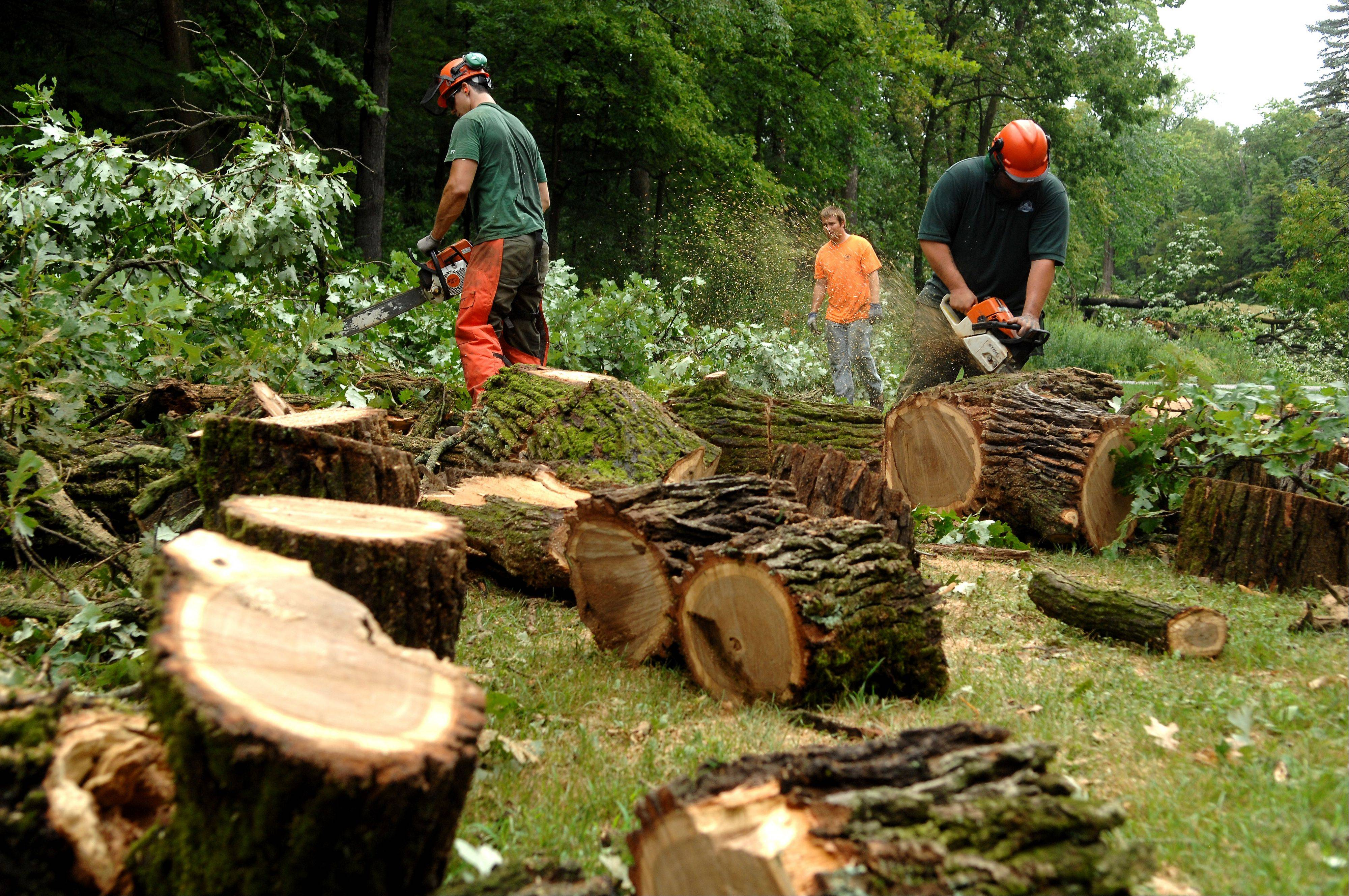 Kane County Forest Preserve District employees Paul Sanchez, left, Matthew Ikemire and Kyle Sparks work on cleaning up several downed trees at Fabyan Forest Preserve in Geneva after strong storms swept through the area early Tuesday morning.