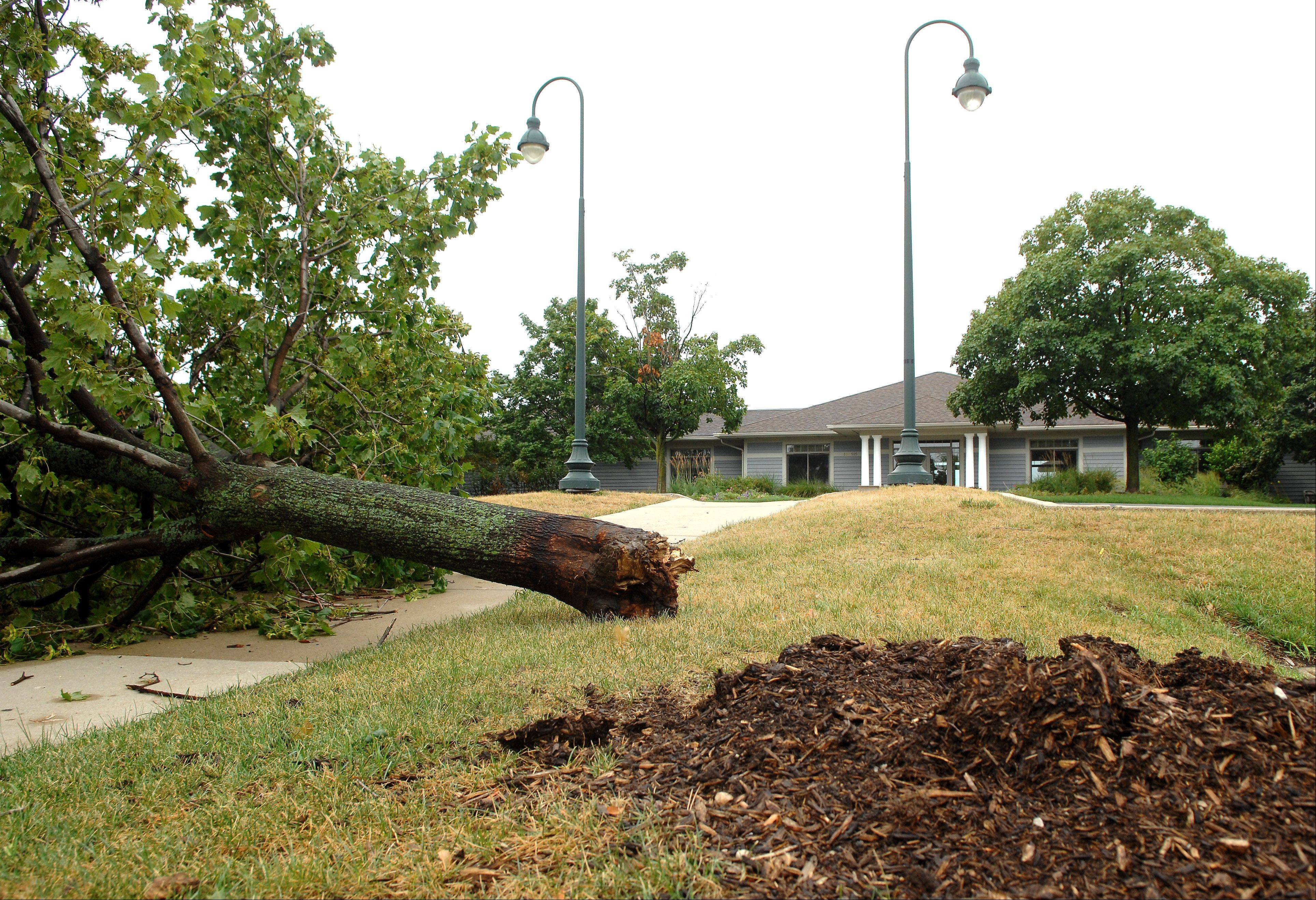 A large tree was downed near the Mill Creek Golf Club clubhouse in Geneva after strong storms swept through the area early Tuesday morning.