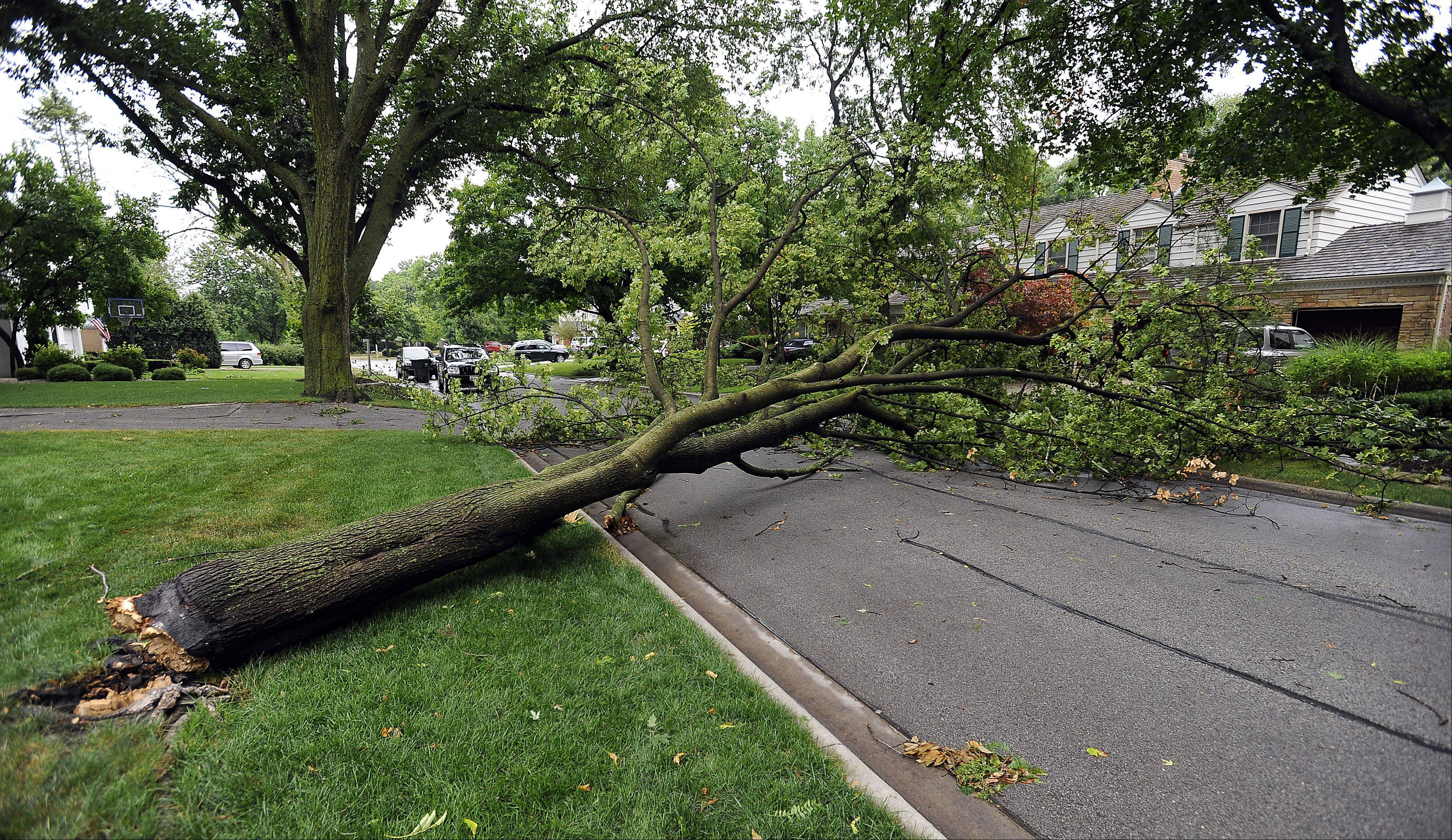 A tree went down in Arlington Heights on South Banbury Road as Tuesday morning storms swept through the northwest suburbs.