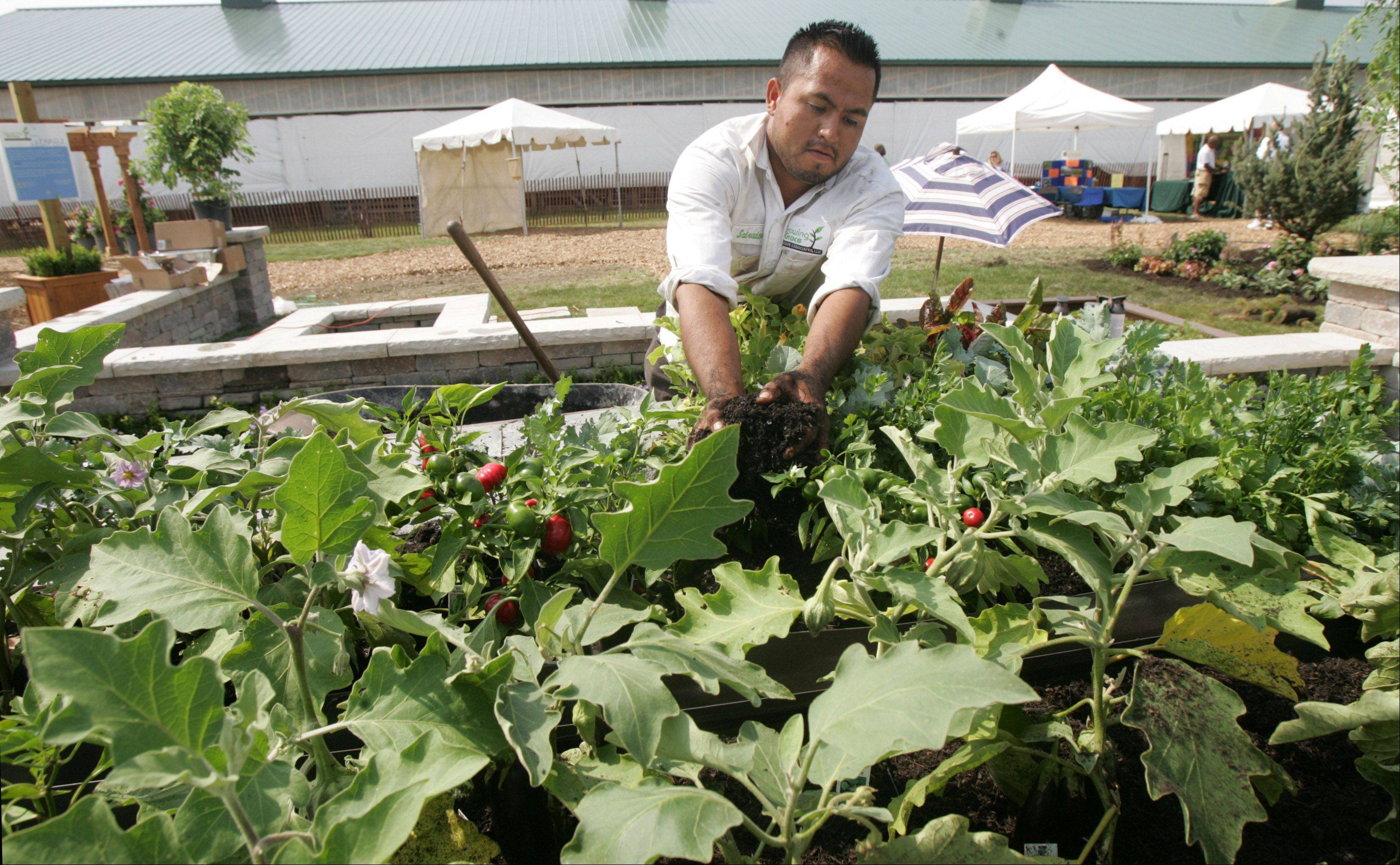 Salvador Mateos spreads mulch around a vegetable garden Wednesday at the Growing Grace Landscape Association exhibit at the Chicago Flower & Garden Show at the Lake County Fair. The show offers variations on outdoor gardens created by area landscape designers.