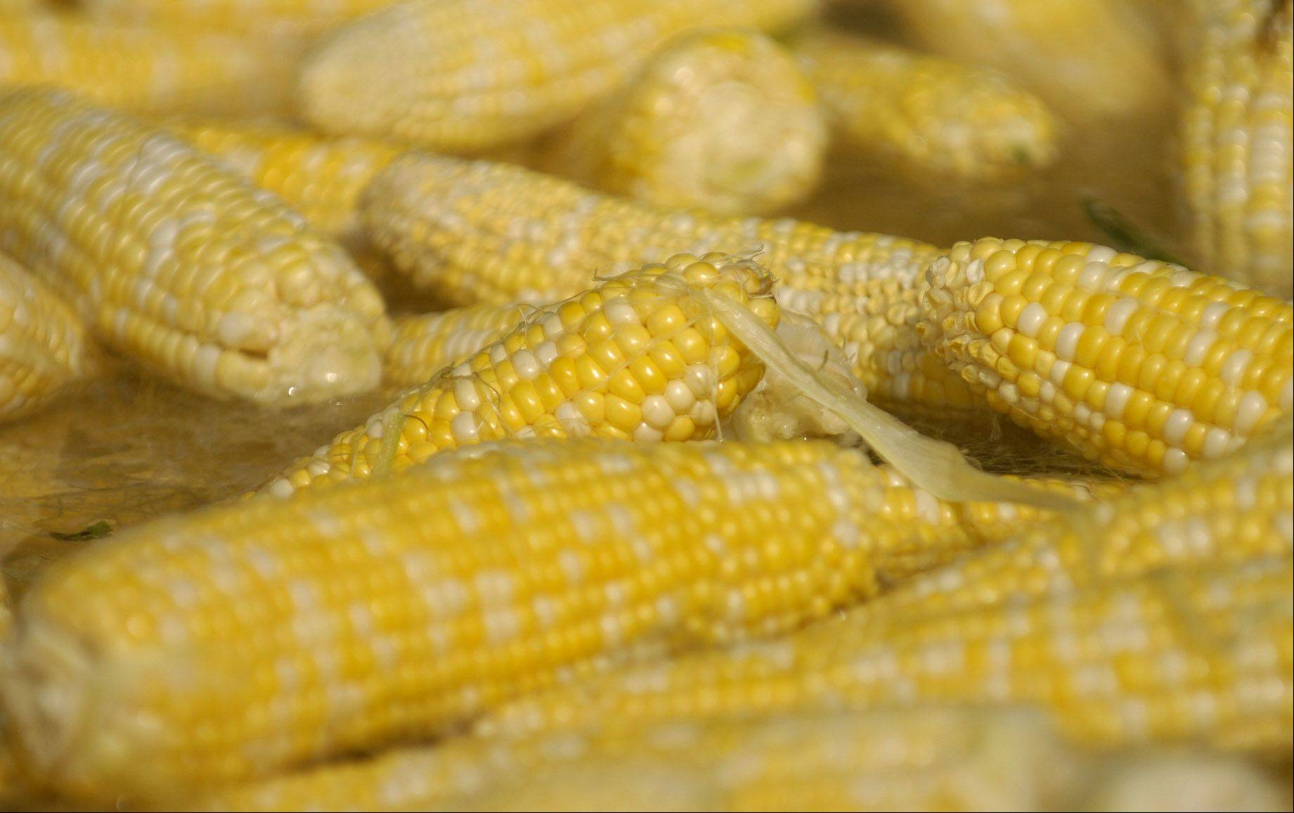 These are some of the 10,000 ears of bicolor corn await cooking at the Sugar Grove Corn Boil.