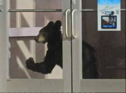 Pennsylvania conservation officers tranquilized a small female bear at the Pittsburgh Mills Mall Sears on Saturday night.