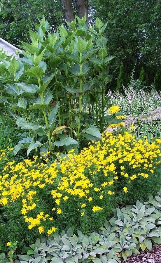 Art In The Garden Easy To Care For Perennials Good For Small