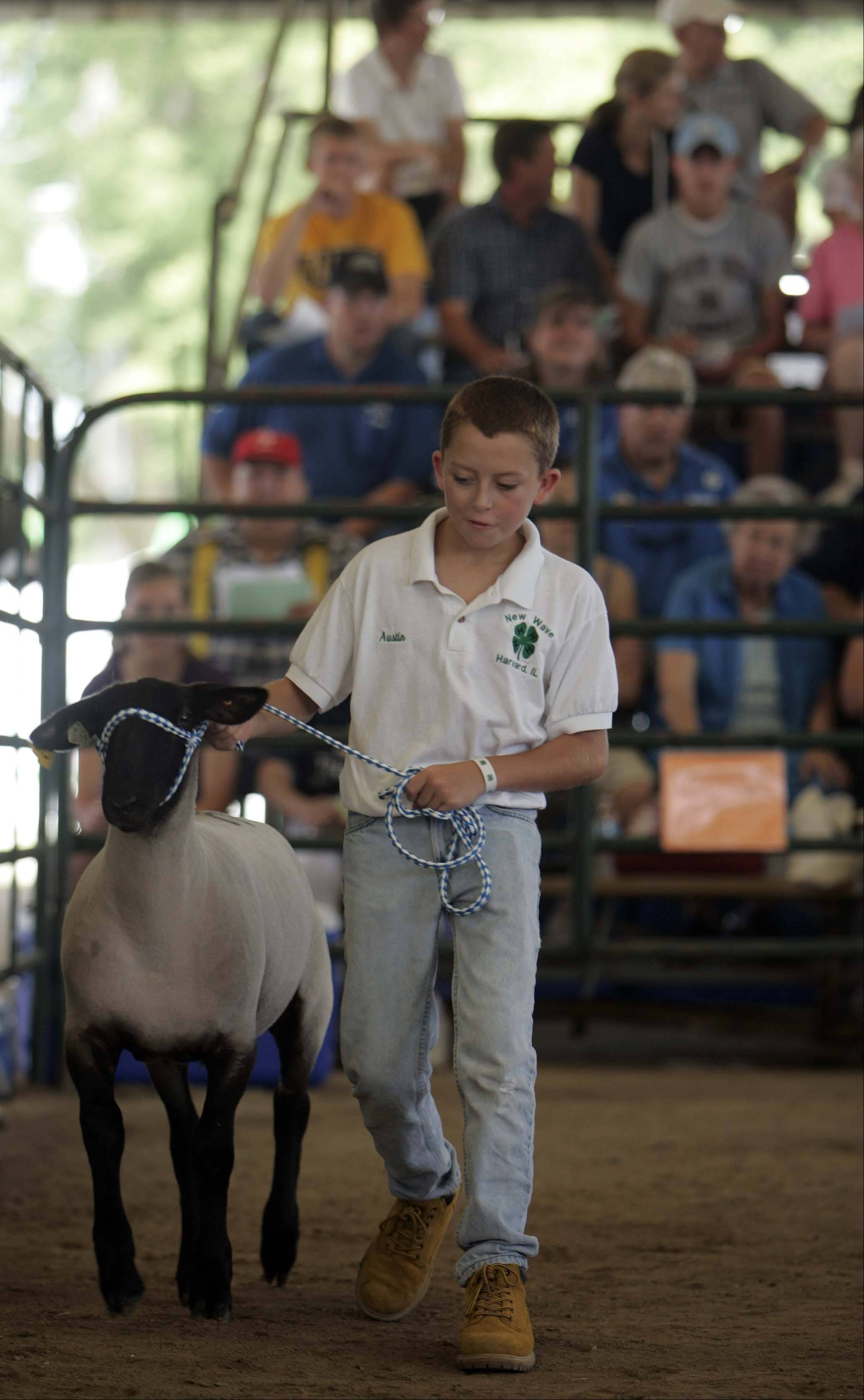 Austin Gratz of Harvard leads his lamb through the ring during the 4-H sheep auction at last year's McHenry County Fair.