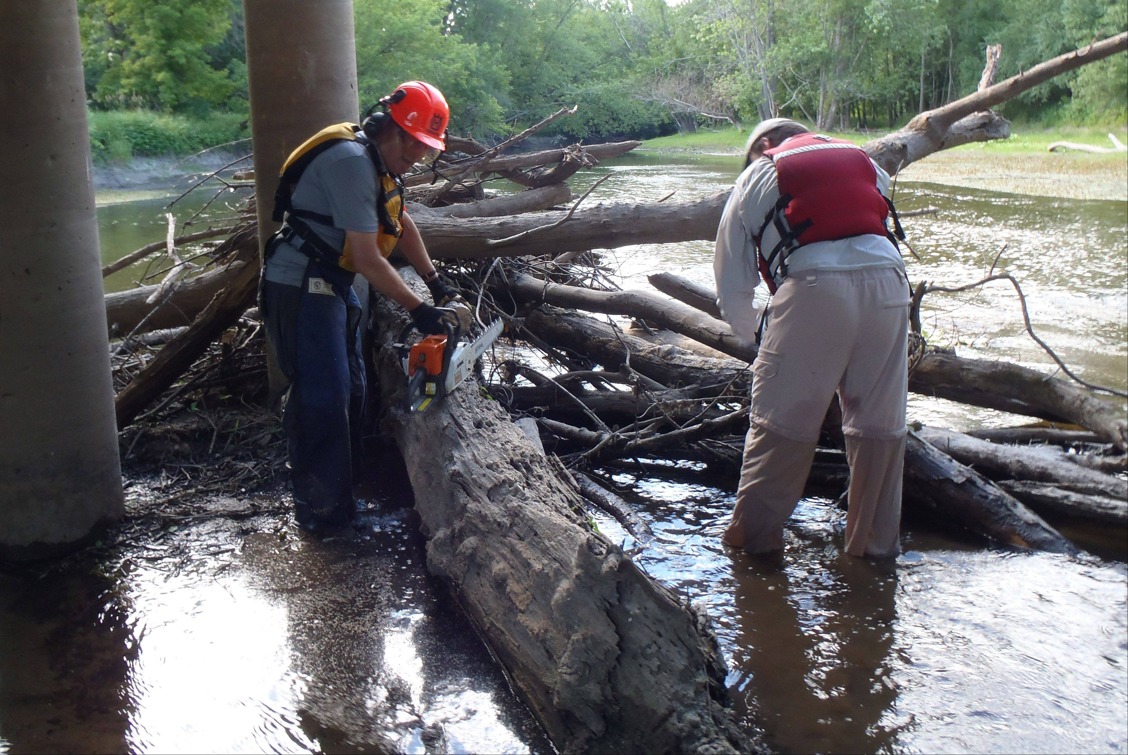 Larry Linden and Paul Klonowski remove a log jam in the Des Plaines River. Crews have been taking advantage of the low water levels in the river to remove debris.