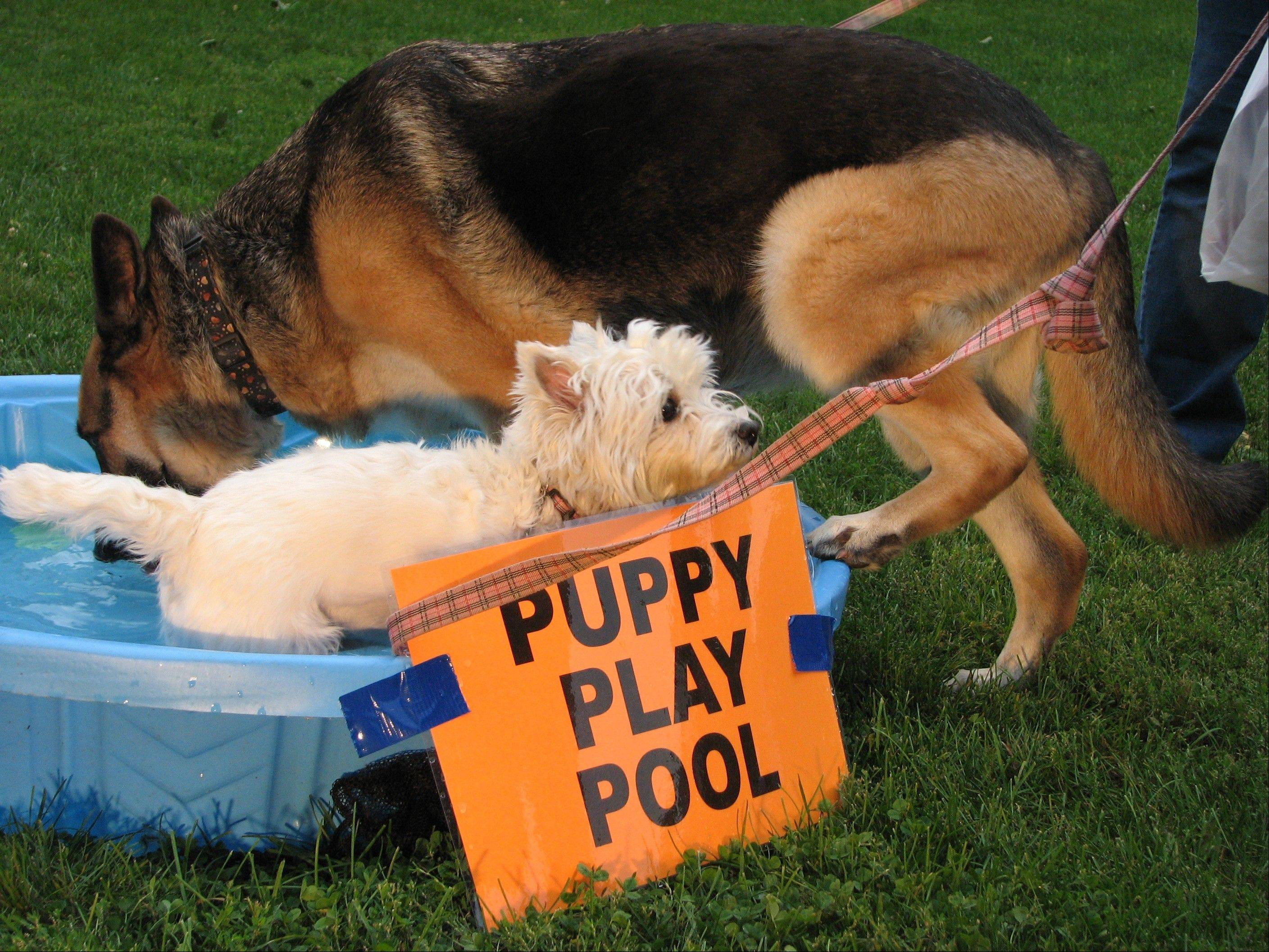 The Palatine Park District will host a Canine Carnival from 6-7:30 p.m. Thursday, Aug. 2, at the Fred P. Hall Amphitheater. The special event, designed for dogs and their owners, includes games and activities for dogs, raffles, vendors and more.