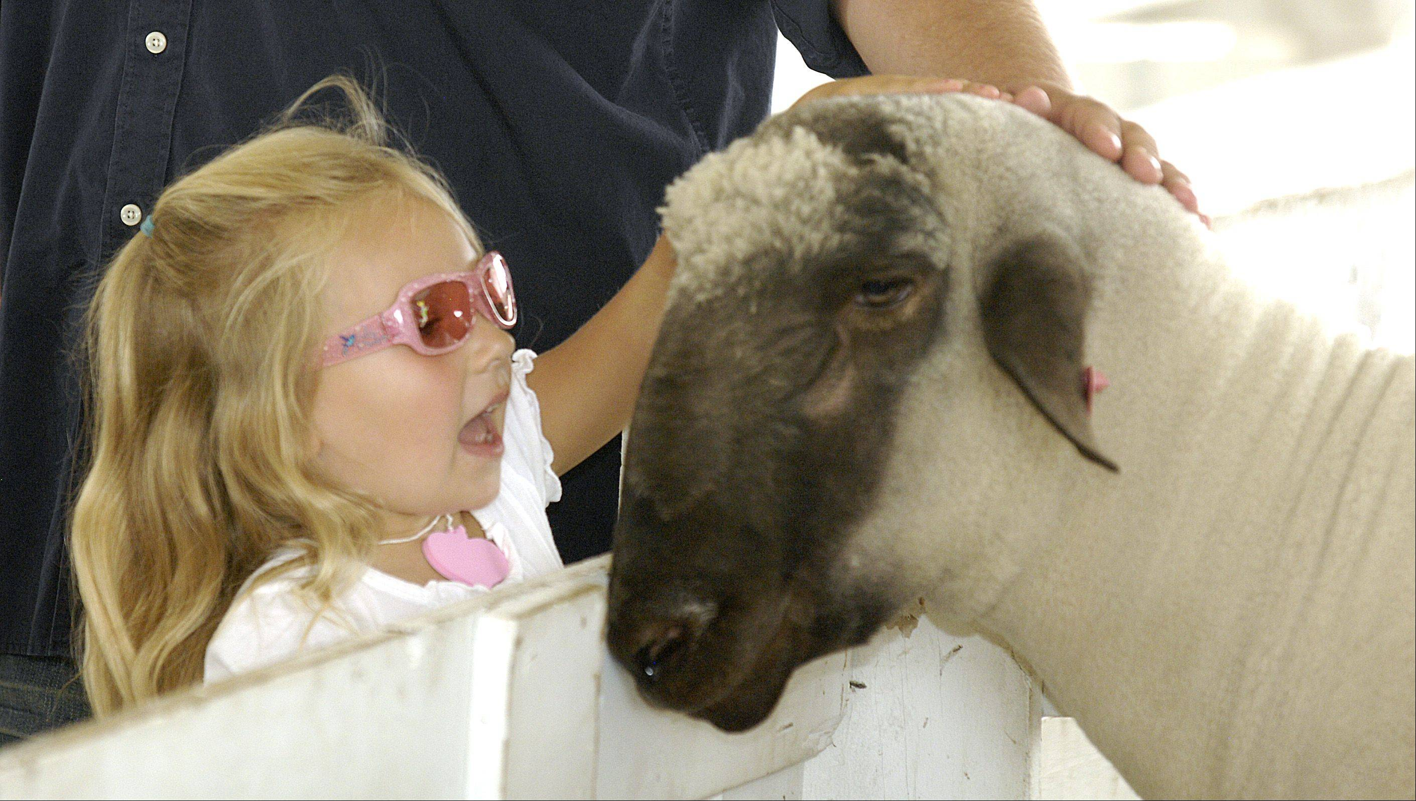 Chole Shinofield, 4 of Aurora pets a sheep on the final day of the DuPage County Fair, Sunday.