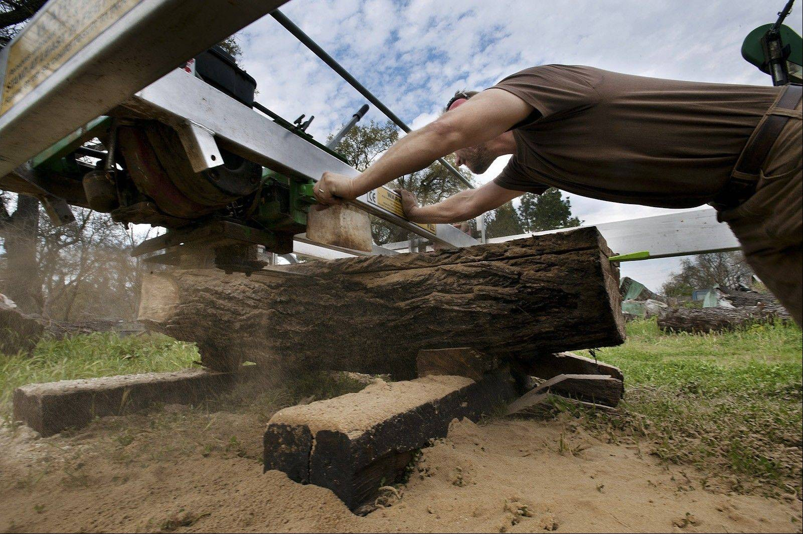 Clark Kayler cuts walnut on an outdoor sawmill at his home. He uses timber from storm- damaged trees to make furniture.