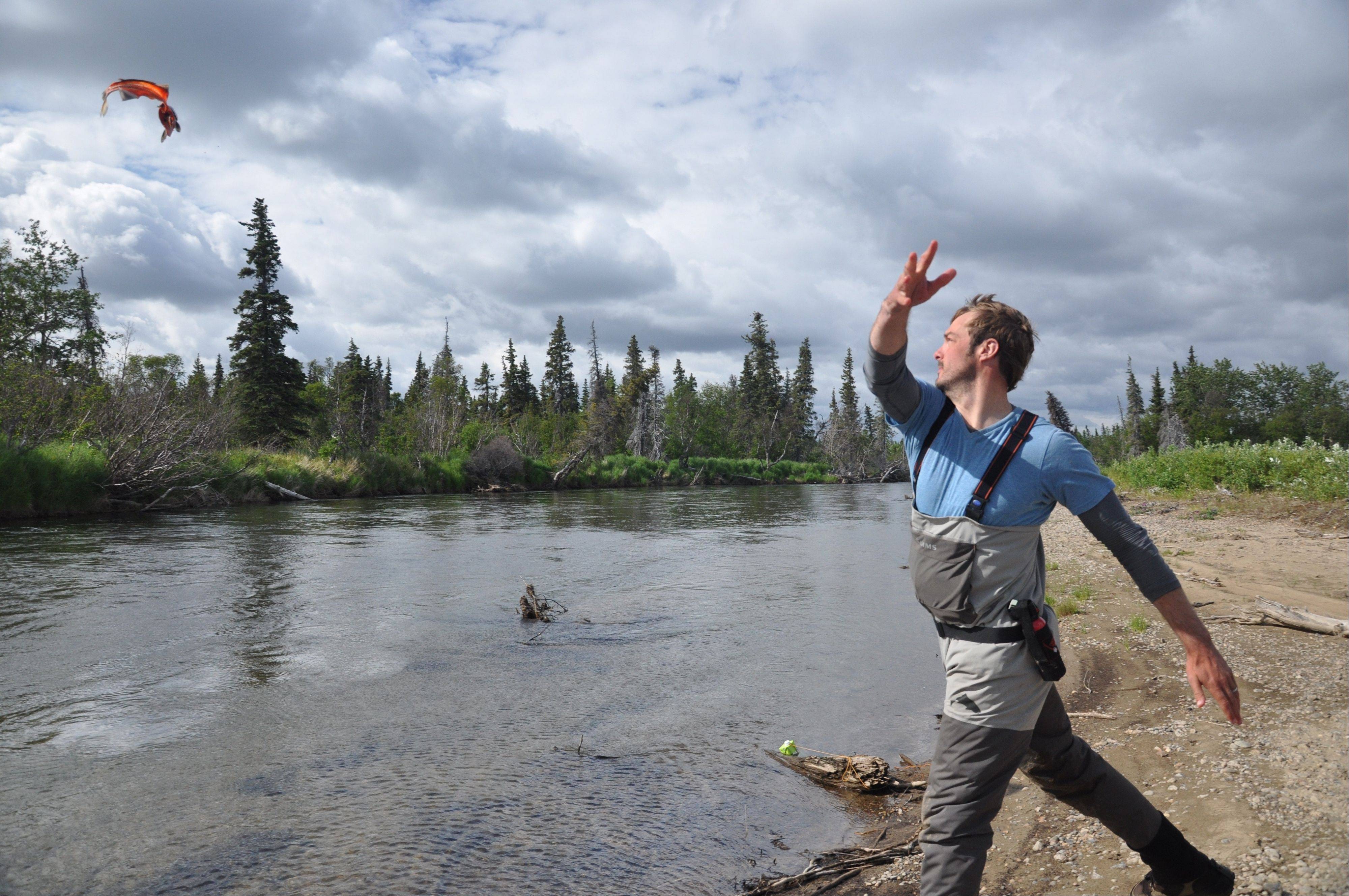 In this publicity photo provided by Wild River Fishing Guides Company, chef and seafood sustainability advocate, Barton Seaver, tosses a fish back into the Stuyahok River in southwestern, Alaska.