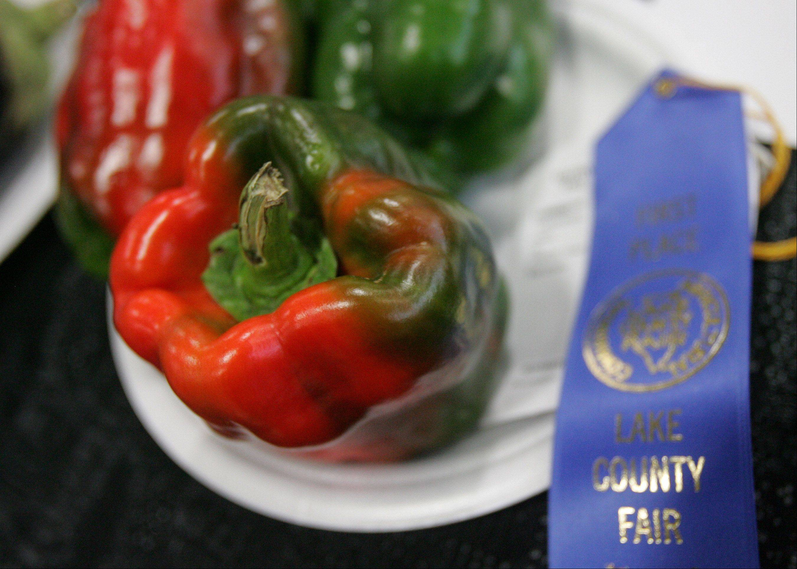 Prize winning peppers during last day of the 84th Annual Lake County Fair Sunday in Grayslake.