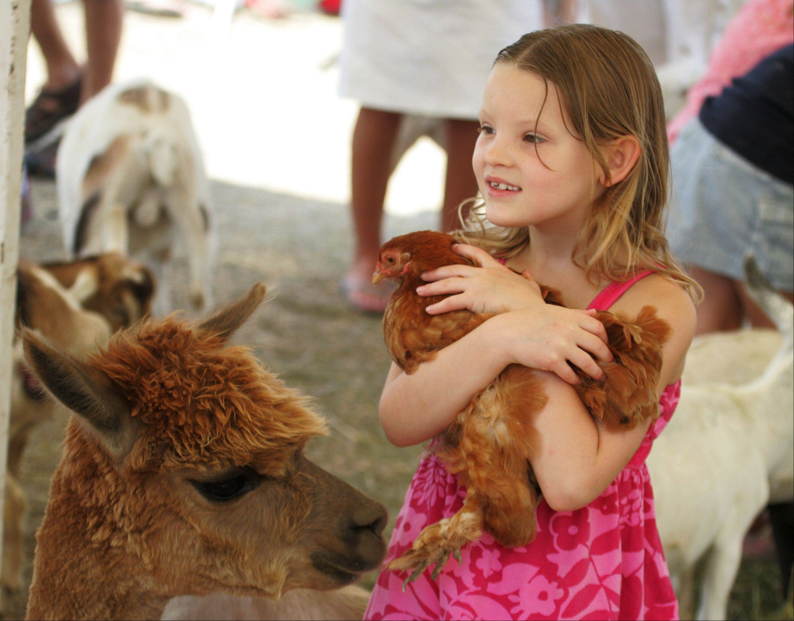Hailey Sonnenberg, 6, of Lake Villa, holds a chicken in Miller's Petting Zoo during last day of the 84th Annual Lake County Fair Sunday in Grayslake.