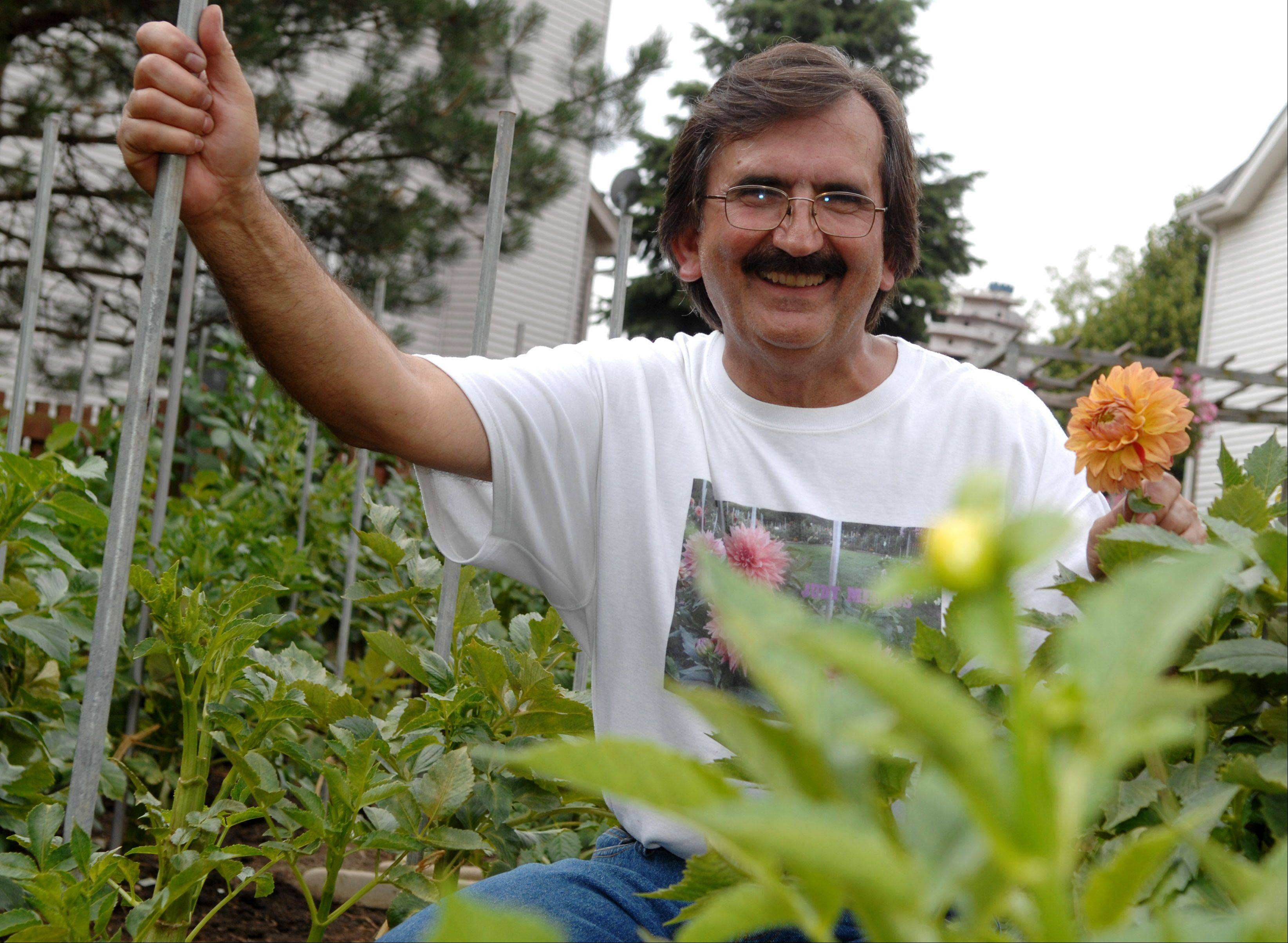 Steve Meggos of Carpentersville is waiting for most of his dahlias to bloom in August.