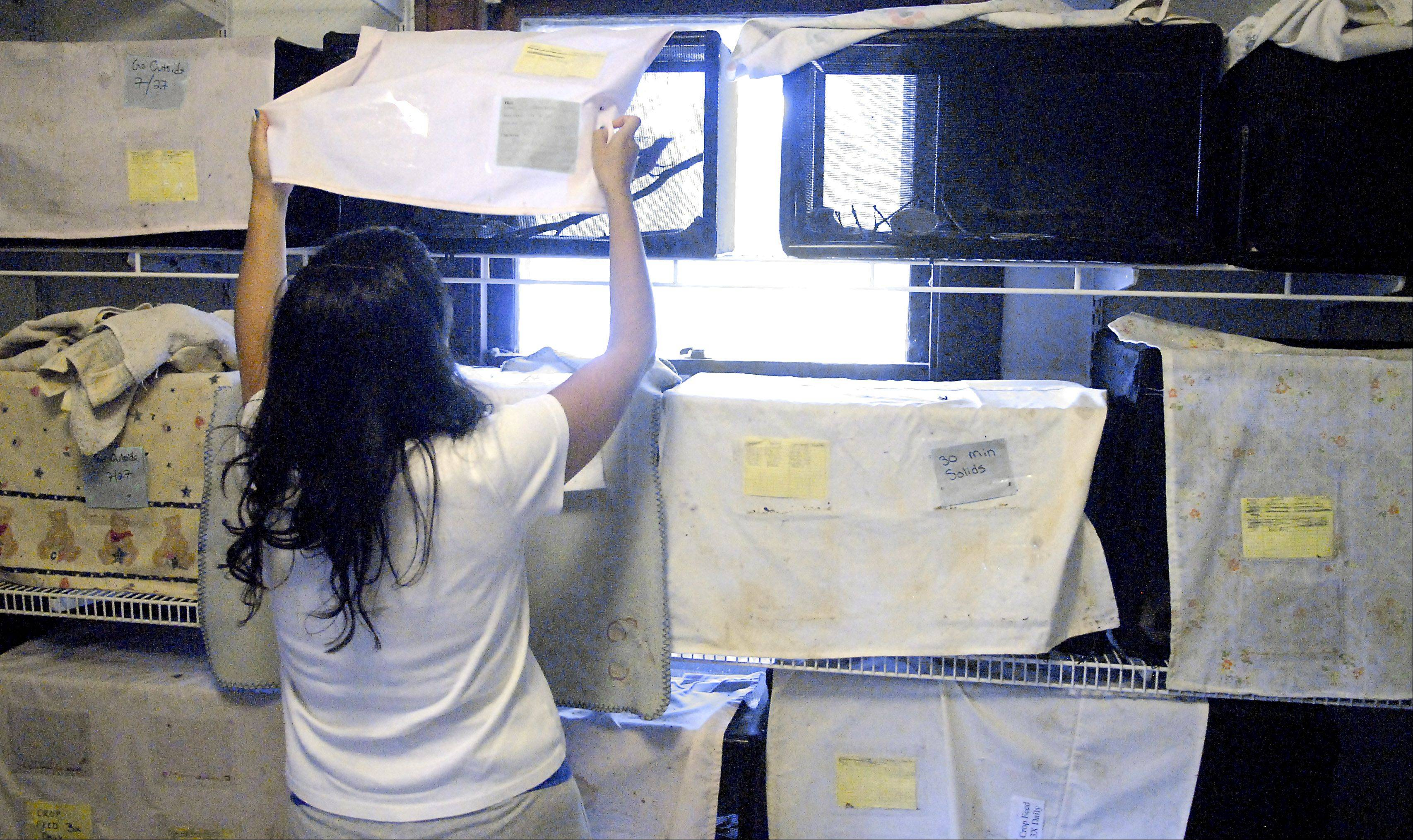 Fox Valley Wildlife Center volunteer Larissa DeSmet of Gilberts uncovers a birdcage for cleaning. All the bird cages and infant mammals located inside have covers over the front of their cages to help keep them calm. DeSmet has been a volunteer since the spring.