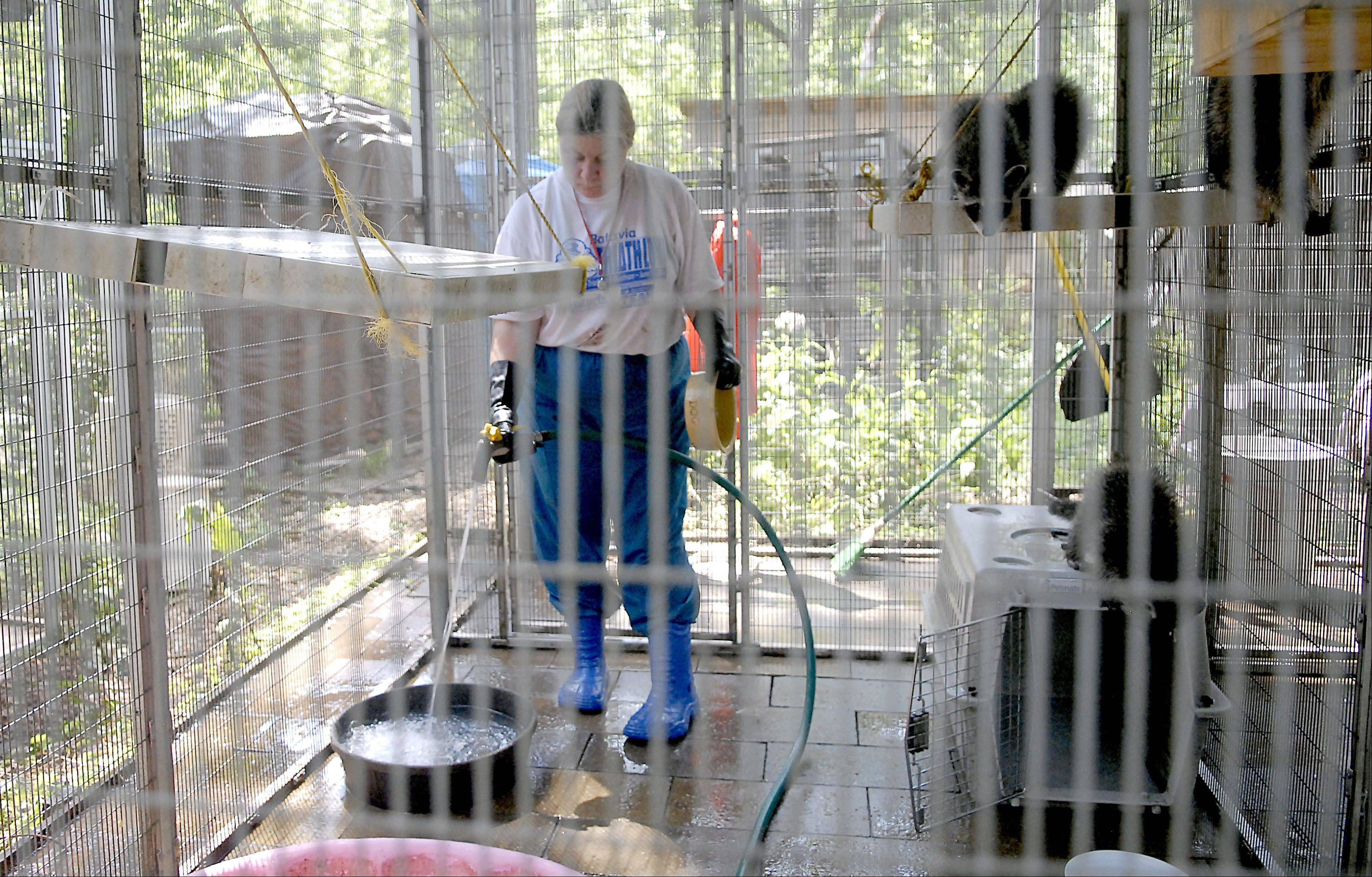 Fox Valley Wildlife Center volunteer Rena Felske of Elgin cleans the young raccoons' enclosure and refills their water bowls and swimming pool. A volunteer for the past two years, Felske enjoys working with the animals in the outside enclosures, especially the raccoons.