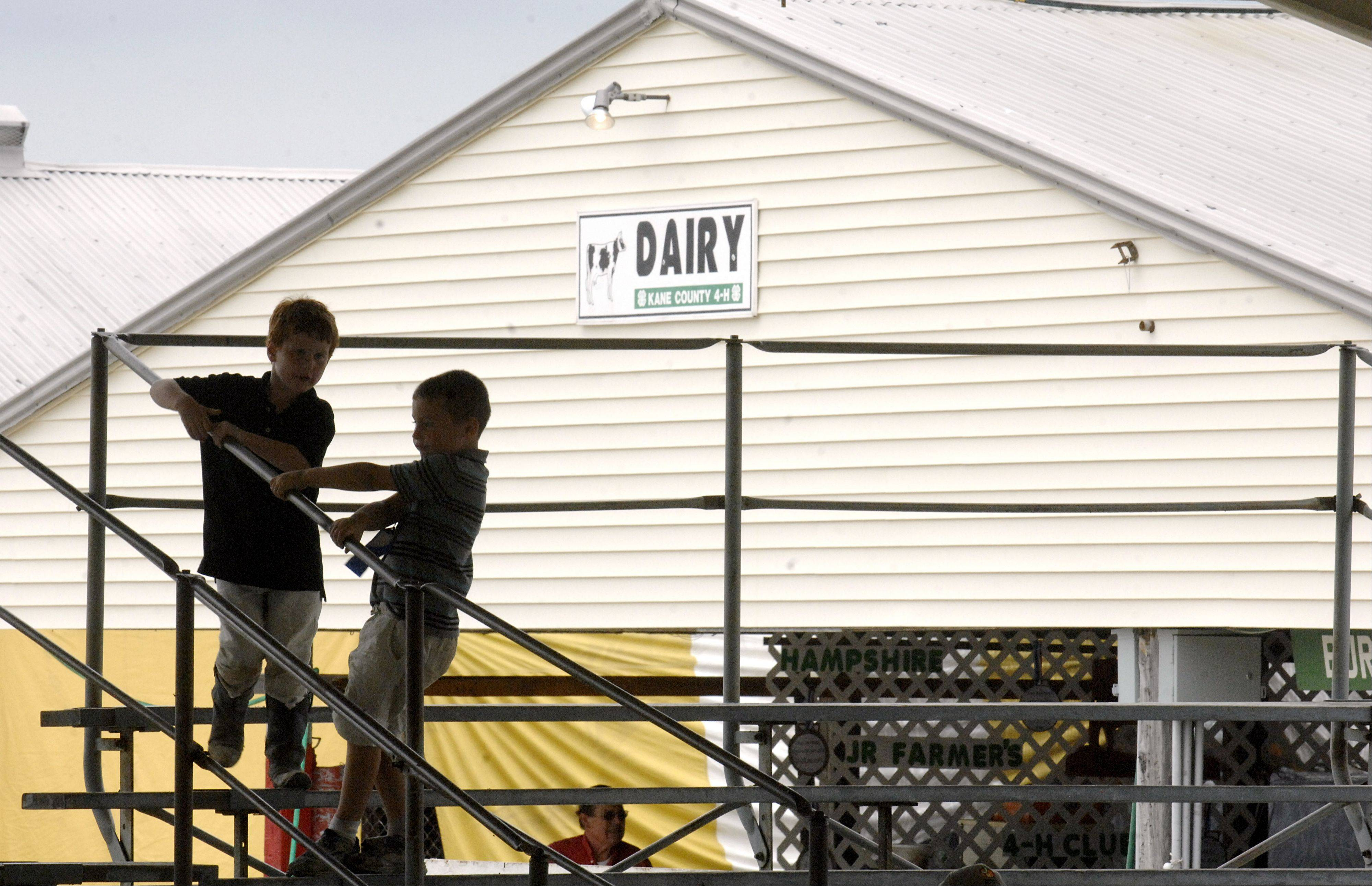 Children play in the stands while dairy cattle are judged during the second day of the Kane County Fair on July 19.