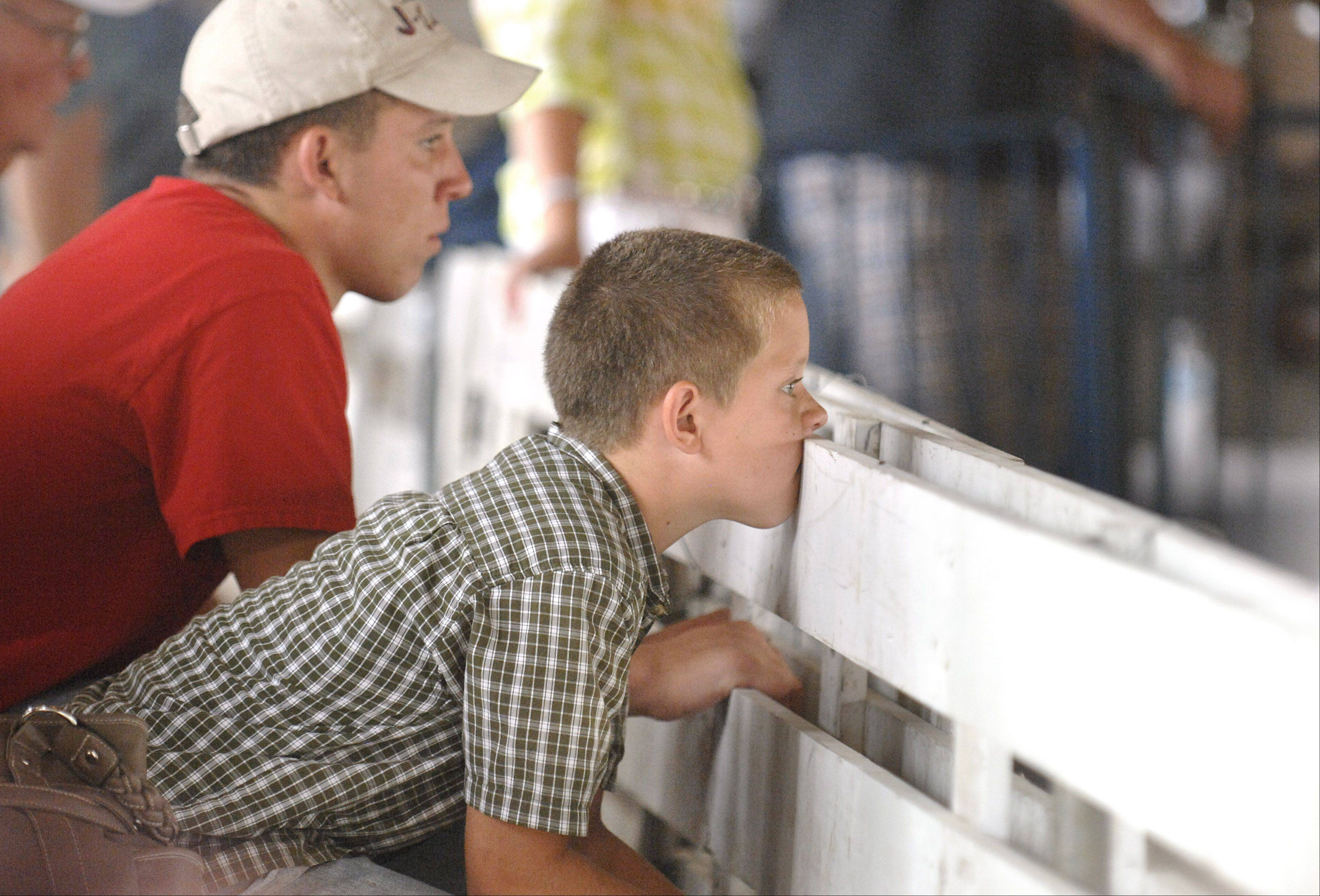 Austin Risley, 10, of Esmond, Ill., watches pig judging during the second day of the Kane County Fair on July 19. Risley, along with his brother, Zac, 18, left, show steers but were helping out friends from Naperville who were showing their pigs.