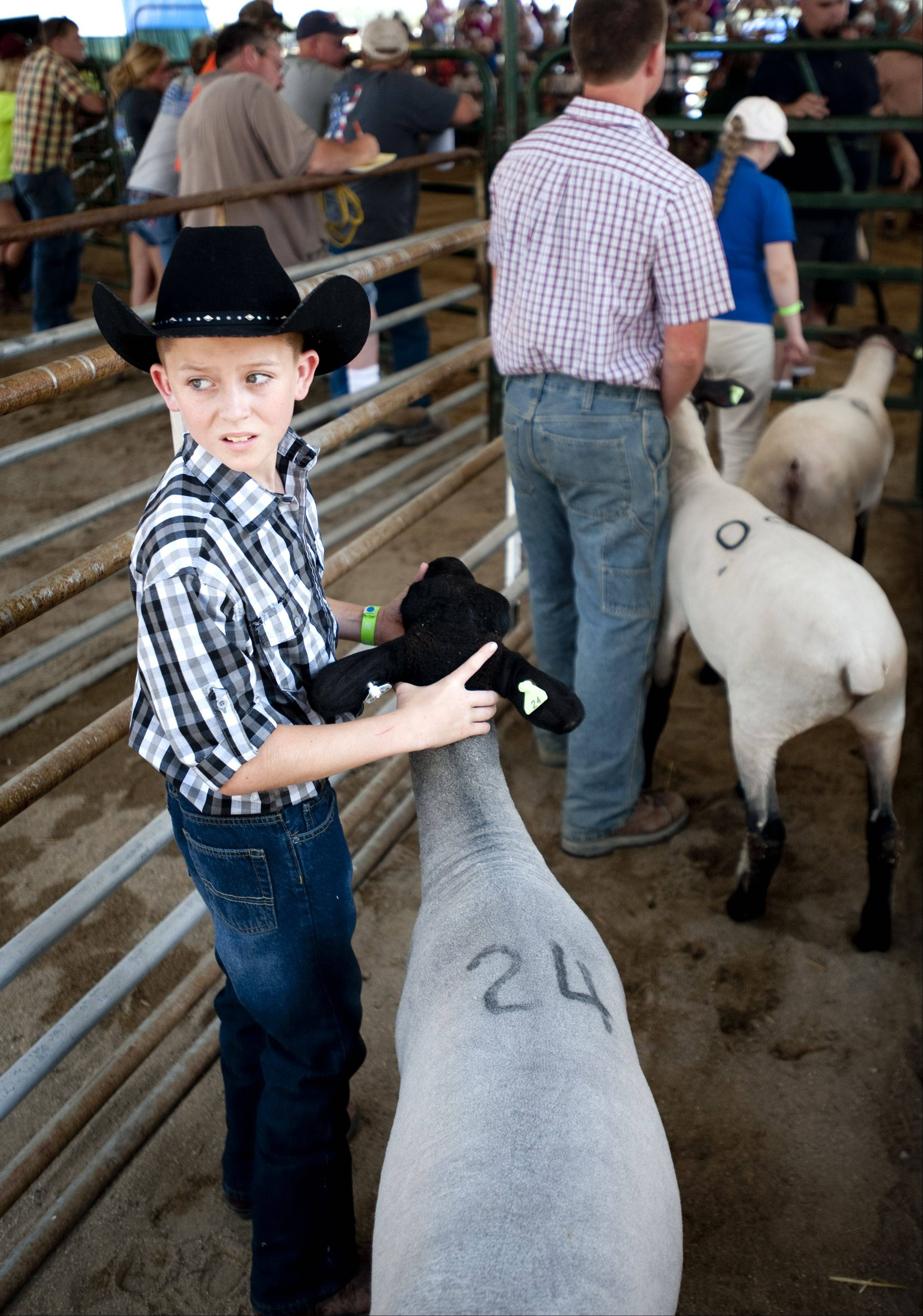 Austin Gratz, 10, of Harvard gets ready to show his sheep at the 4-H Livestock Auction and Sale of Champions at the McHenry County Fair in Woodstock Saturday.