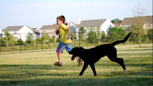 A boy and a dog enjoy Riley's Run Dog Park in Bartlett. The site will host the rescheduled Woofstock on Aug. 16. Organizers of the Bartlett Park District event postponed it from its original July 25 date because of extreme heat that day.