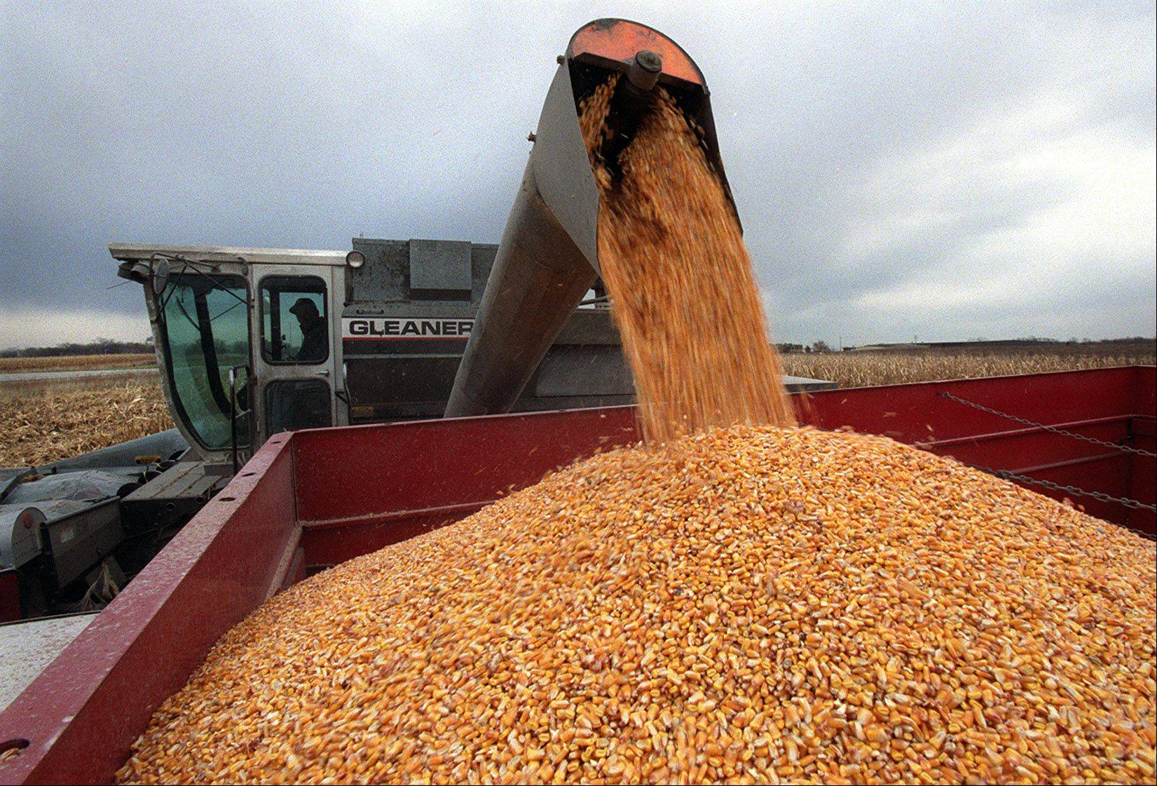 A drought covering two-thirds of the country has damaged much of the country's corn crops and pushed grain prices to record levels, triggering fears that a spike in food prices will soon follow.