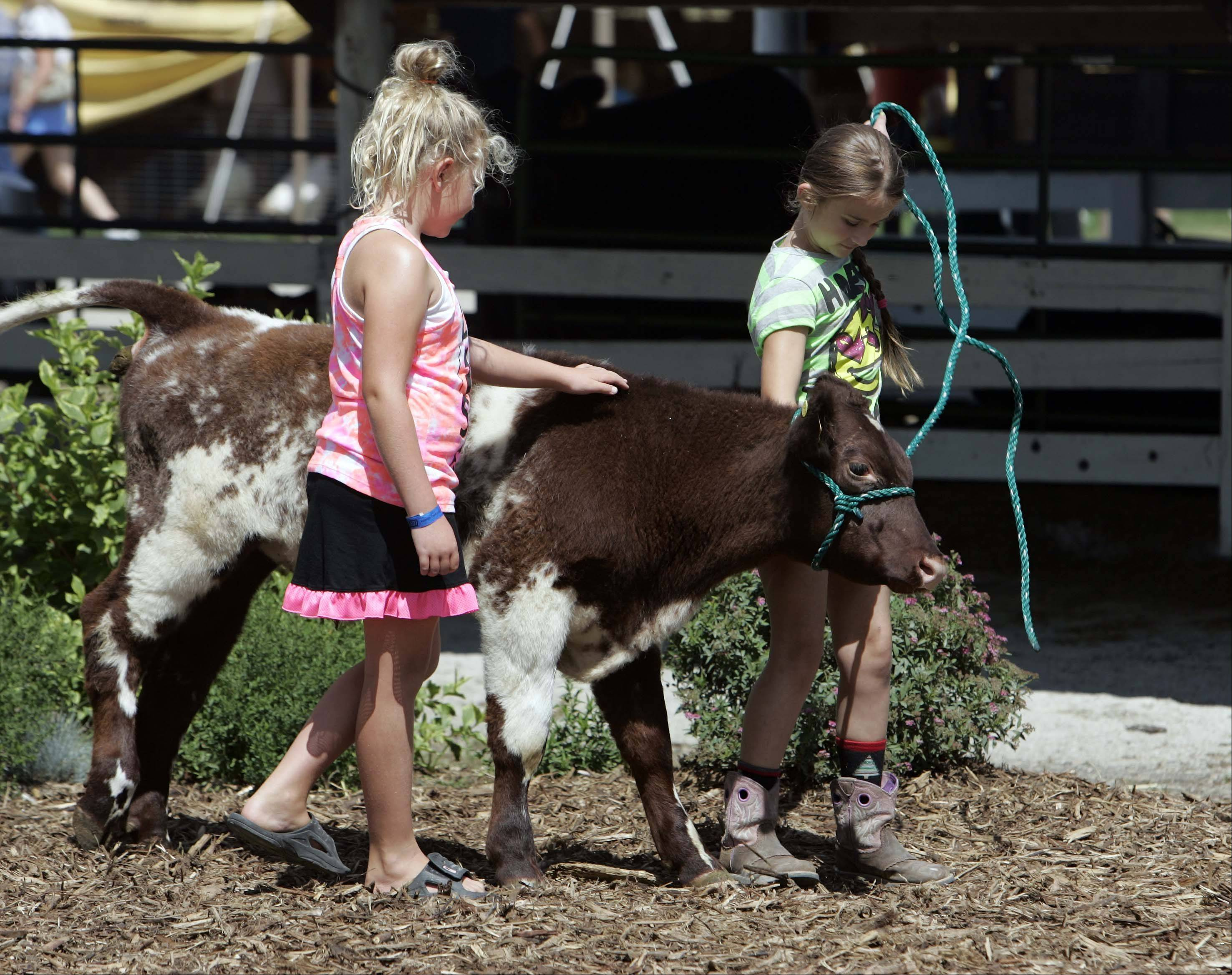 Rachael Kay Freitag, of Hebron, left, and Danielle Menge of Harvard, both 7, try to control RJ, a bull calf, while they have their picture taken Sunday at the McHenry County Fair in Woodstock.