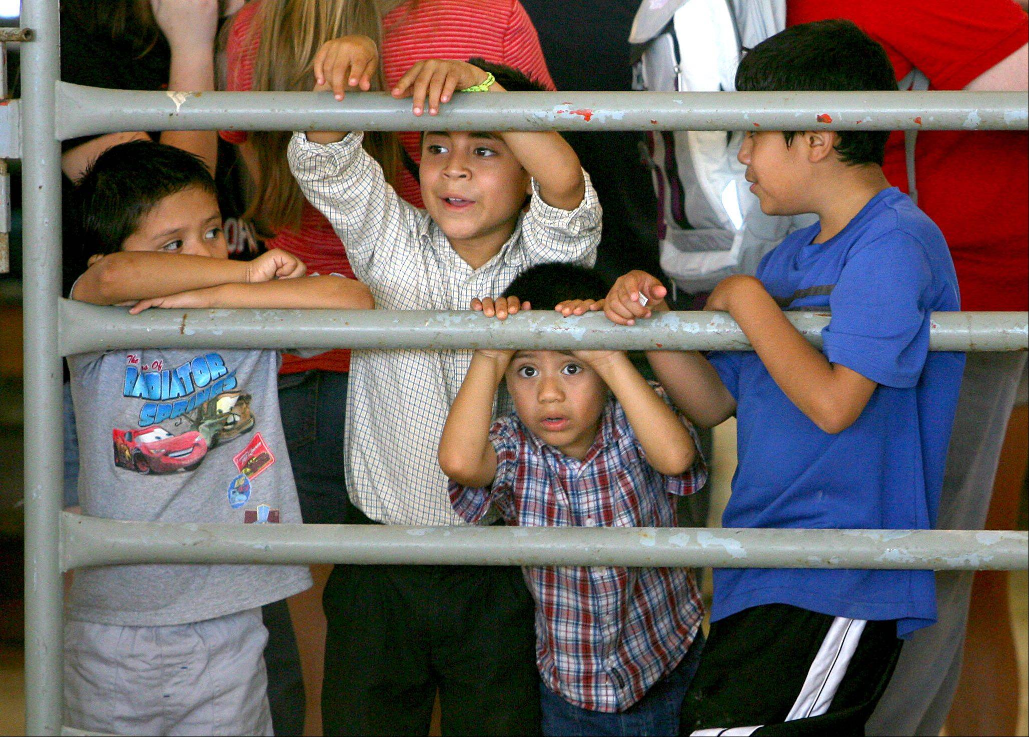 Kids peek their heads through the corral to see the livestock costume contest at the Lake County Fair Friday in Grayslake.