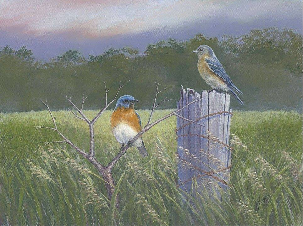 Bluebirds in pastels by Jenny Vogt.