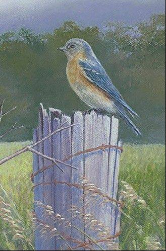 Bluebird in pastels by Jenny Vogt.