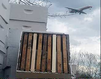 Jets take off and land as more than one million bees do their job at O�Hare.