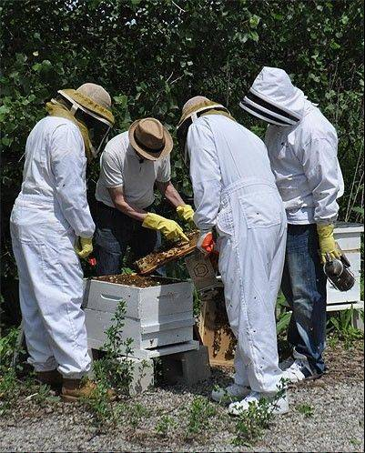 Bee keepers harvest honey at the apiary at O'Hare