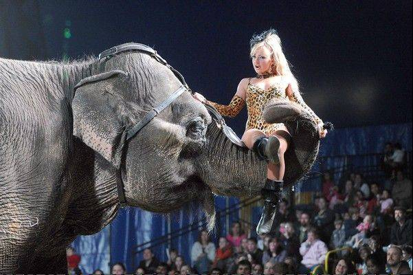 an analysis of the saying circus is coming to fairground sunday Nbc senior political analyst mark halperin says that the press should not be combatants trying to beat the people saying 'do more of that circus premieres.