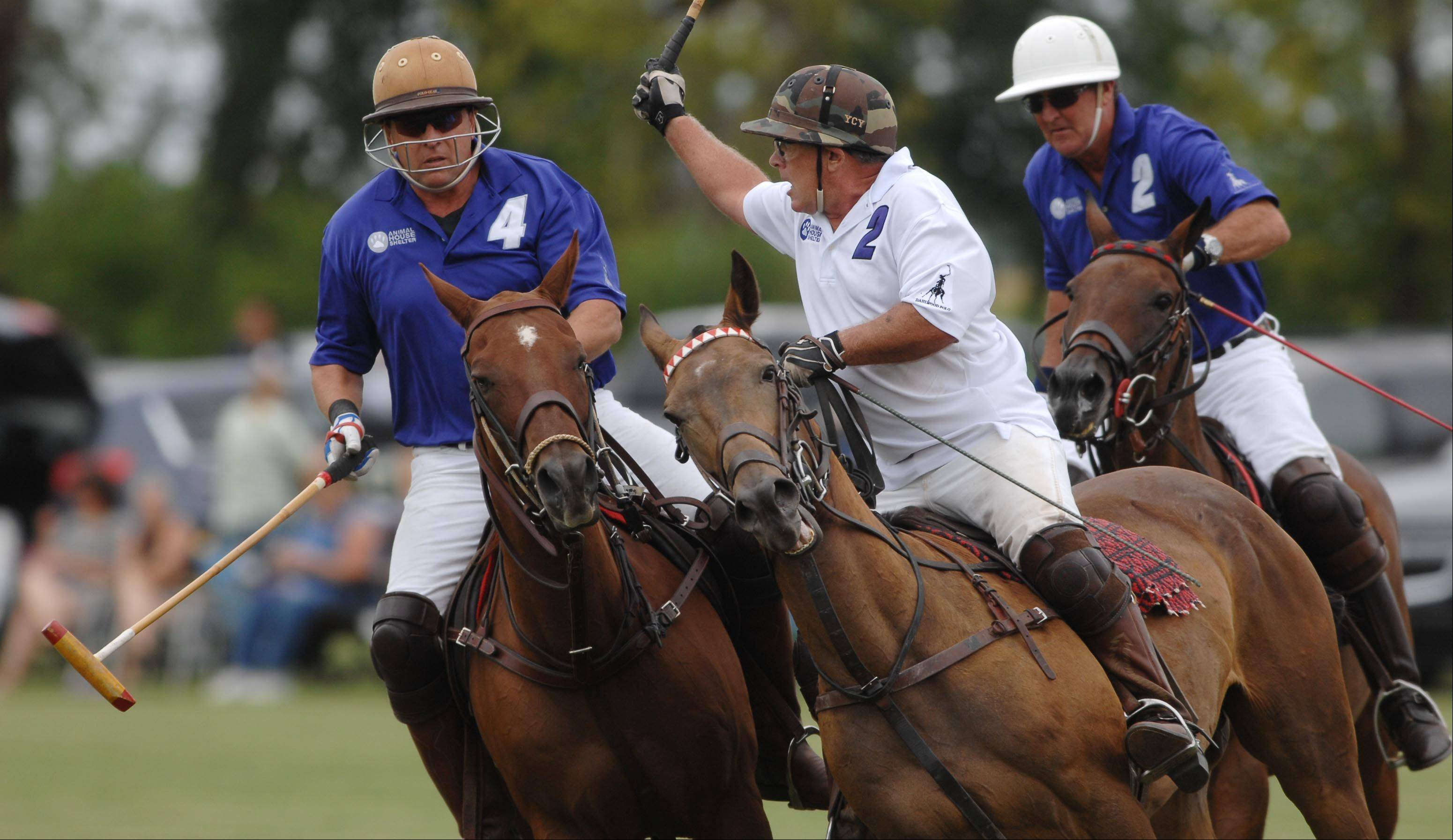 John Green watches his shot as Robert Soos, left, and David Wigdahl chase him during the second annual Polo for Pets Tailgate Charity Match Sunday at the Dahlwood Polo Farm in Elgin. The match raised money for the Animal House Shelter in Huntley.