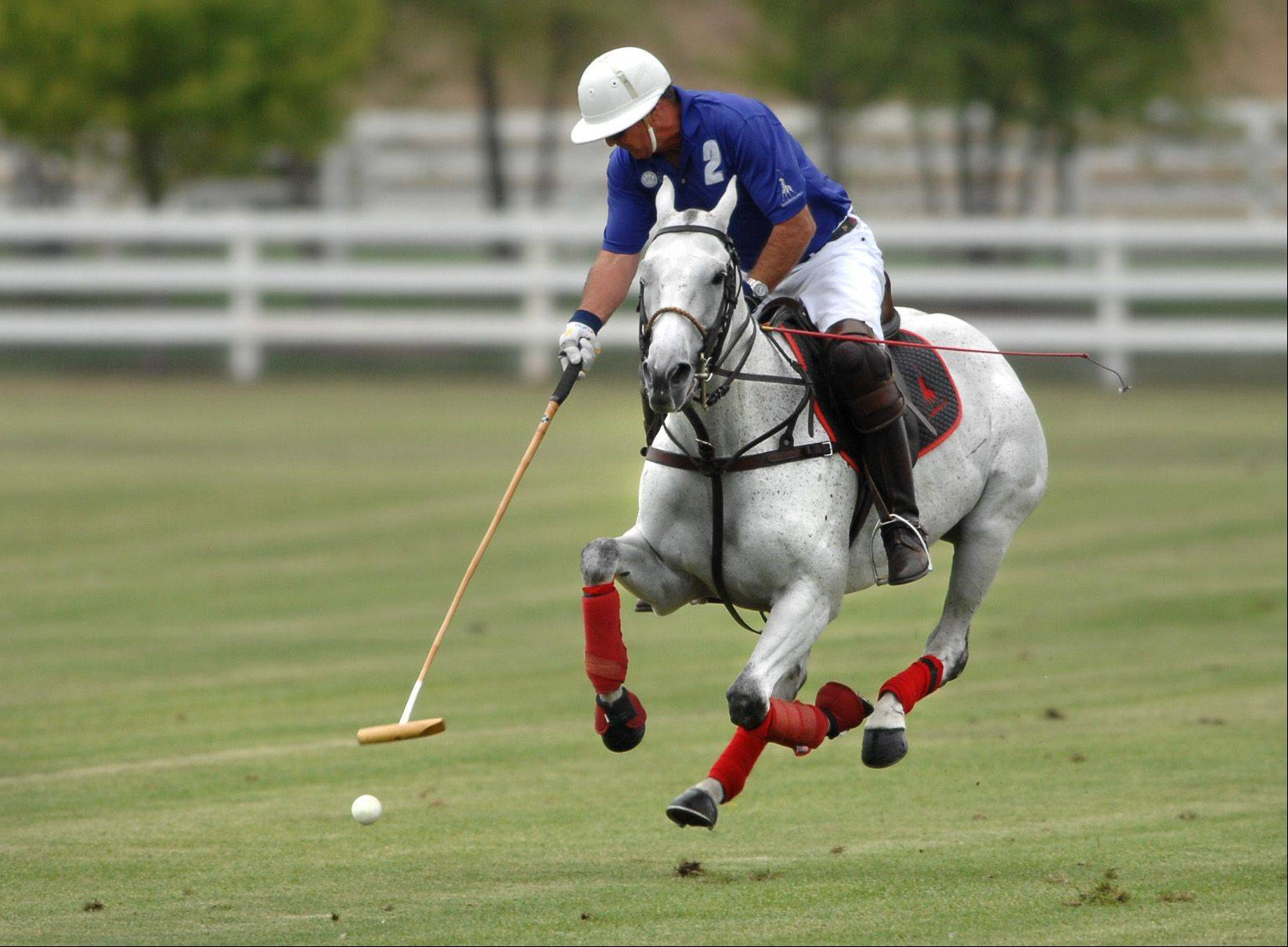 David Wigdahl charges upfield during the second annual Polo for Pets Tailgate Charity Match Sunday at the Dahlwood Polo Farm in Elgin. The match raised money for the Animal House Shelter in Huntley. Wigdahl is the owner of the polo farm.