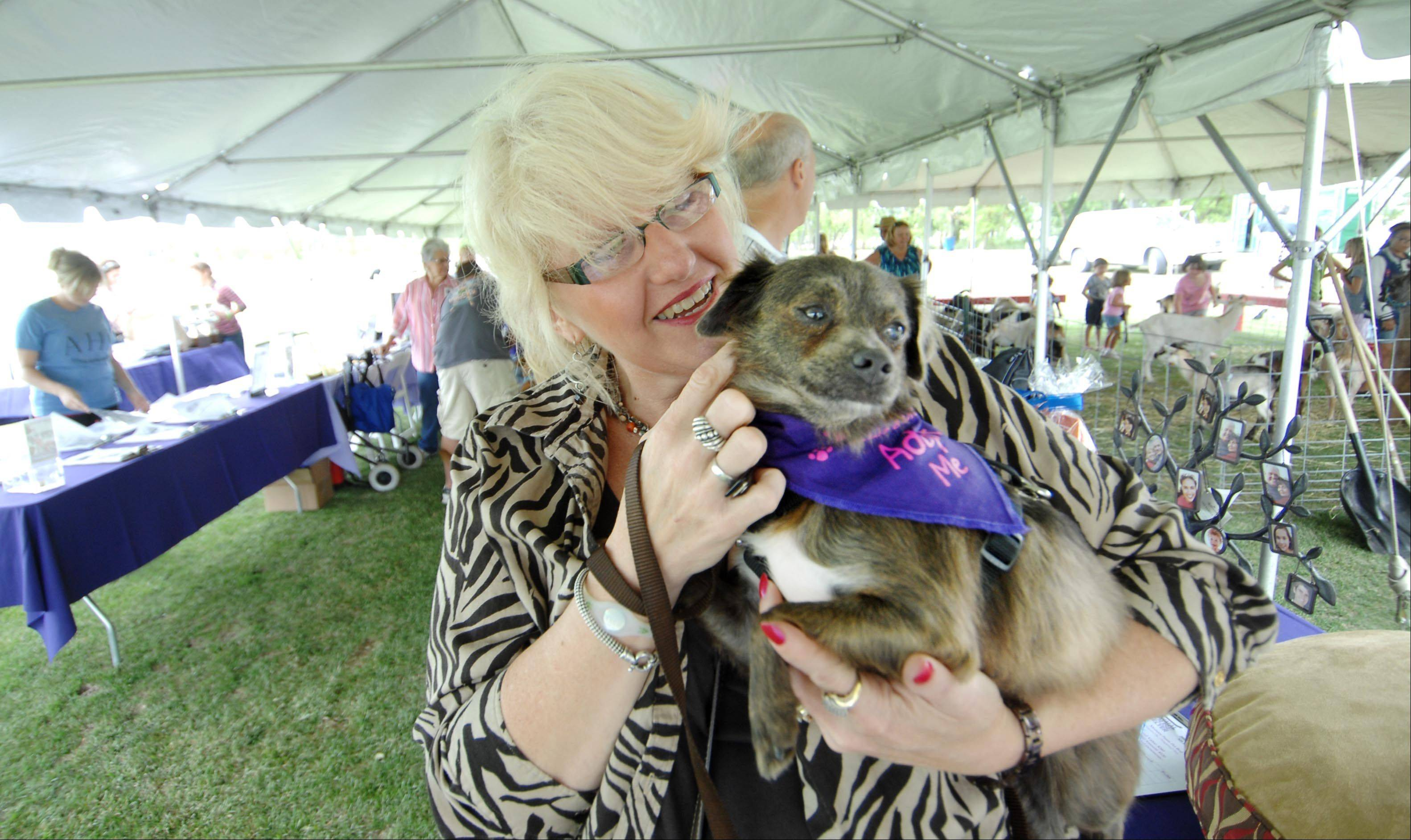 Volunteer Cami Brown holds Cinnamon, a three-year-old Sheltie mix, at the second annual Polo for Pets Tailgate Charity Match Sunday at the Dahlwood Polo Farm in Elgin. The match raised money for the Animal House Shelter in Huntley. Cinnamon is up for adoption.