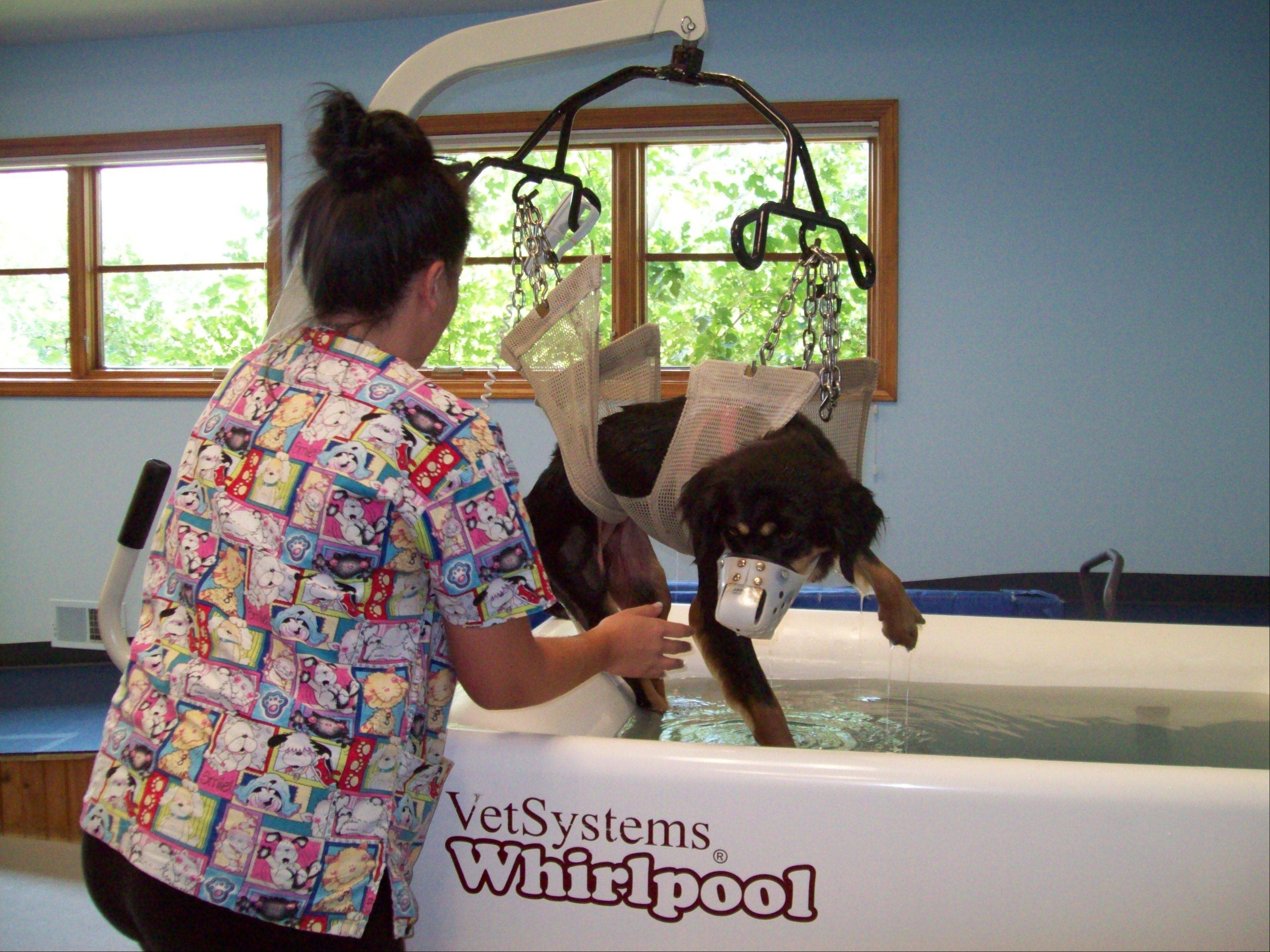 This whirlpool bath at the TOPS Veterinary Rehabilitation center in Grayslake is just one of many therapies for Sadie, a mother dog who was shot in the head and back and left to die.