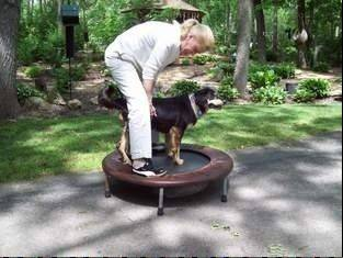 Owner Joal Derse Dauer logs trampoline time with Sadie as a way to strengthen the legs of the dog, who was severely injured after being shot and left to die.