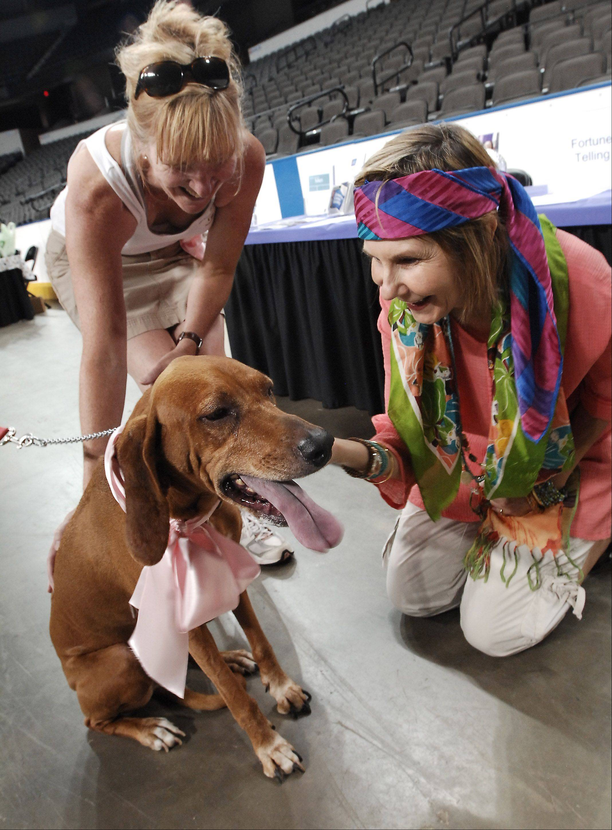 With owner Susan Esbrook of Arlington Heights looking on, redbone coon hound Tally gets her fortune told by Madame Mookus, alias Char Padovani, right, at a previous edition of the Bark for Live event.